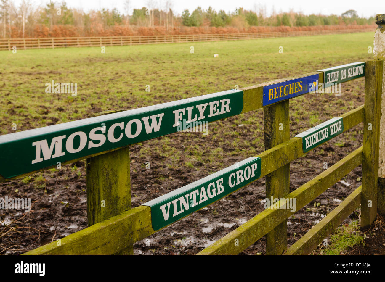 Signs on a field with famous racehorses Moscow Flyer, Beef or Salmon, Vintage Crop and Kicking King - Stock Image