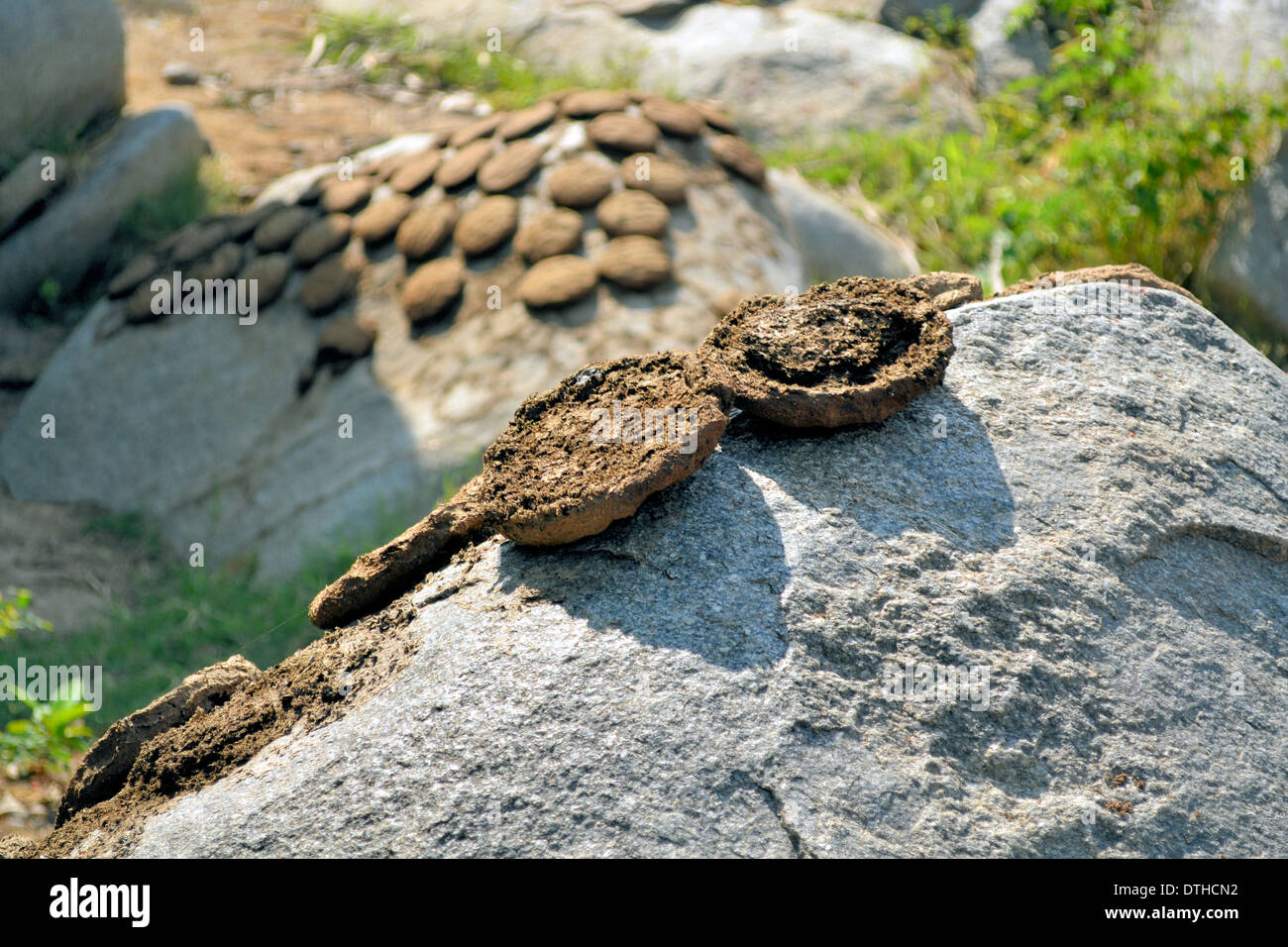 cow dung drying in the sun on a stone, India Stock Photo