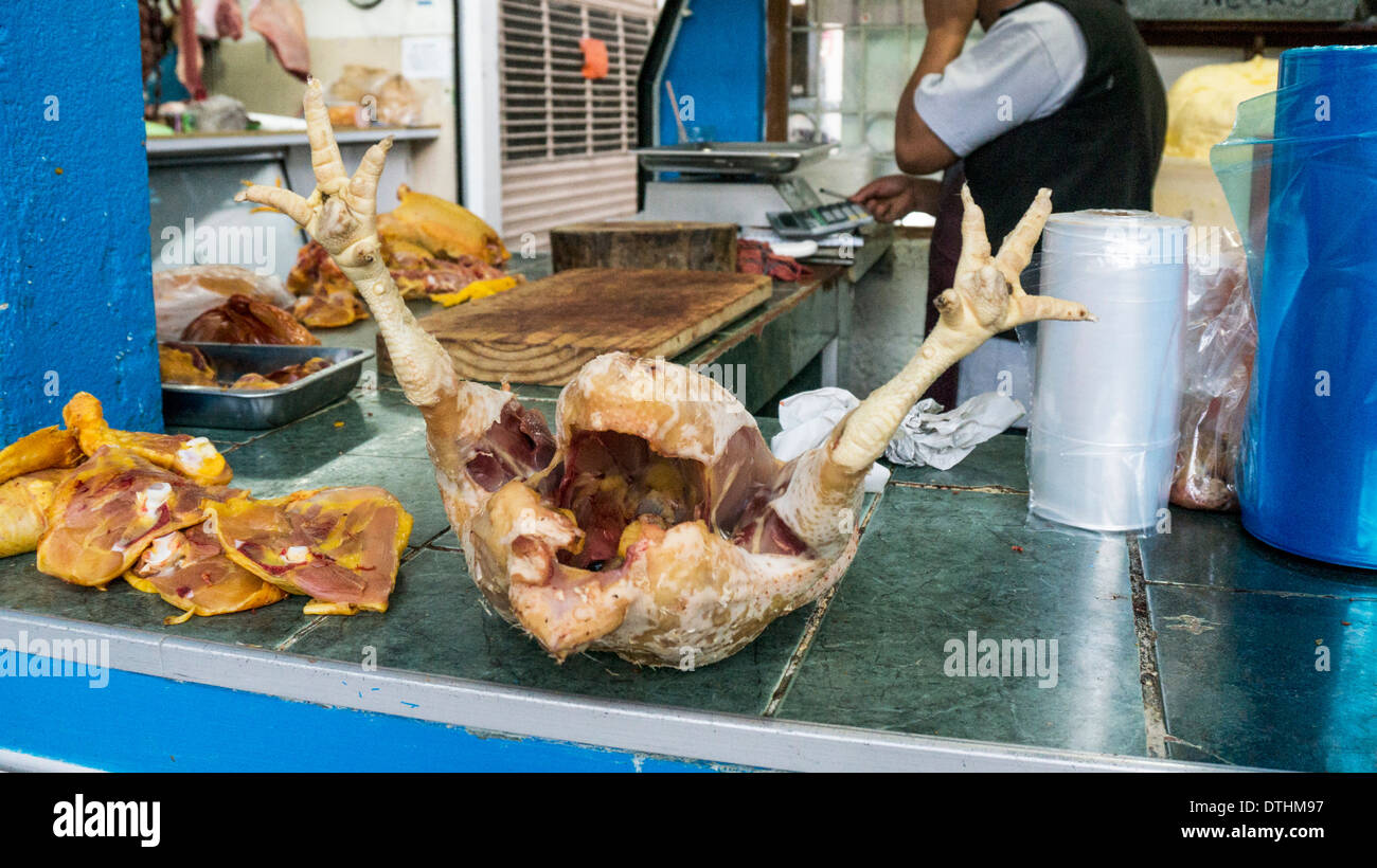 plump whole plucked eviscerated chicken complete with feet for sale on counter of chicken butcher stall La Merced market - Stock Image