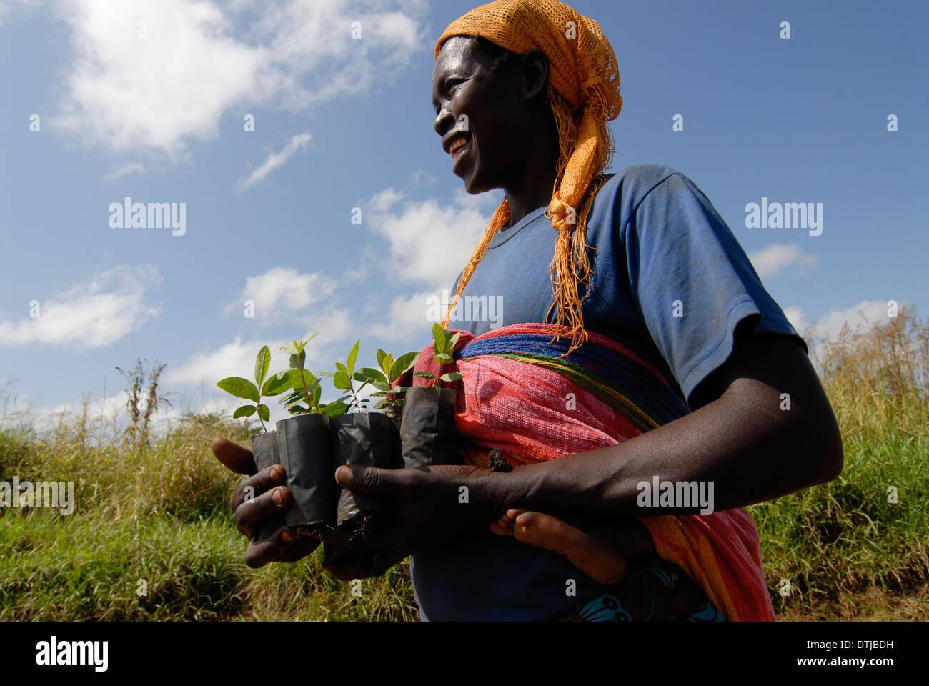 UGANDA Kitgum , woman with tree seedlings - Stock Image