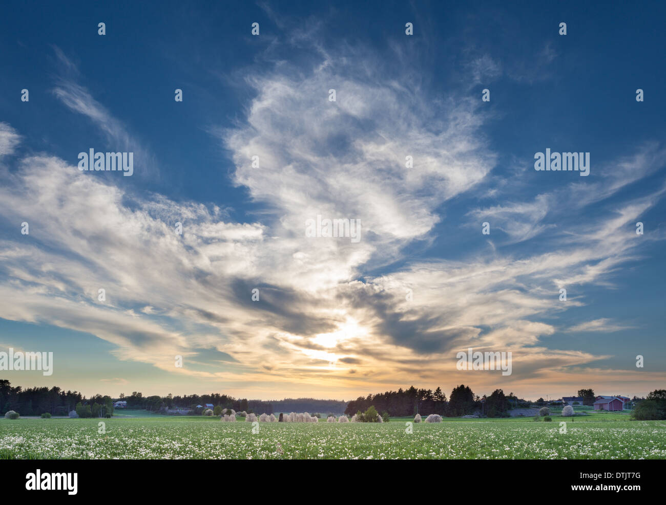 Summery evening at countryside - Stock Image