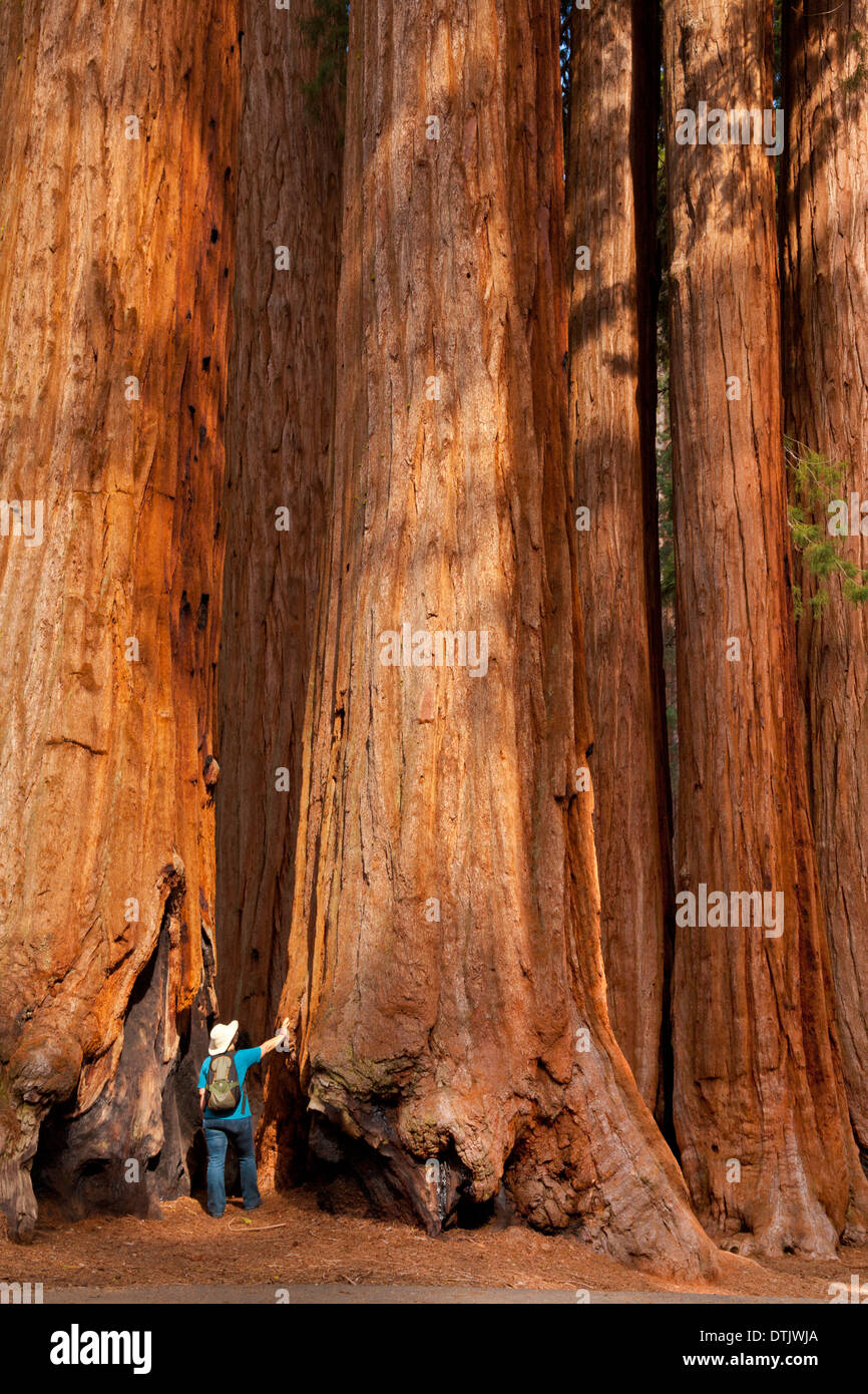 middle eastern singles in sequoia national park Middle eastern native  general sherman tree in sequoia national park, california this tree is the largest known living single stem.
