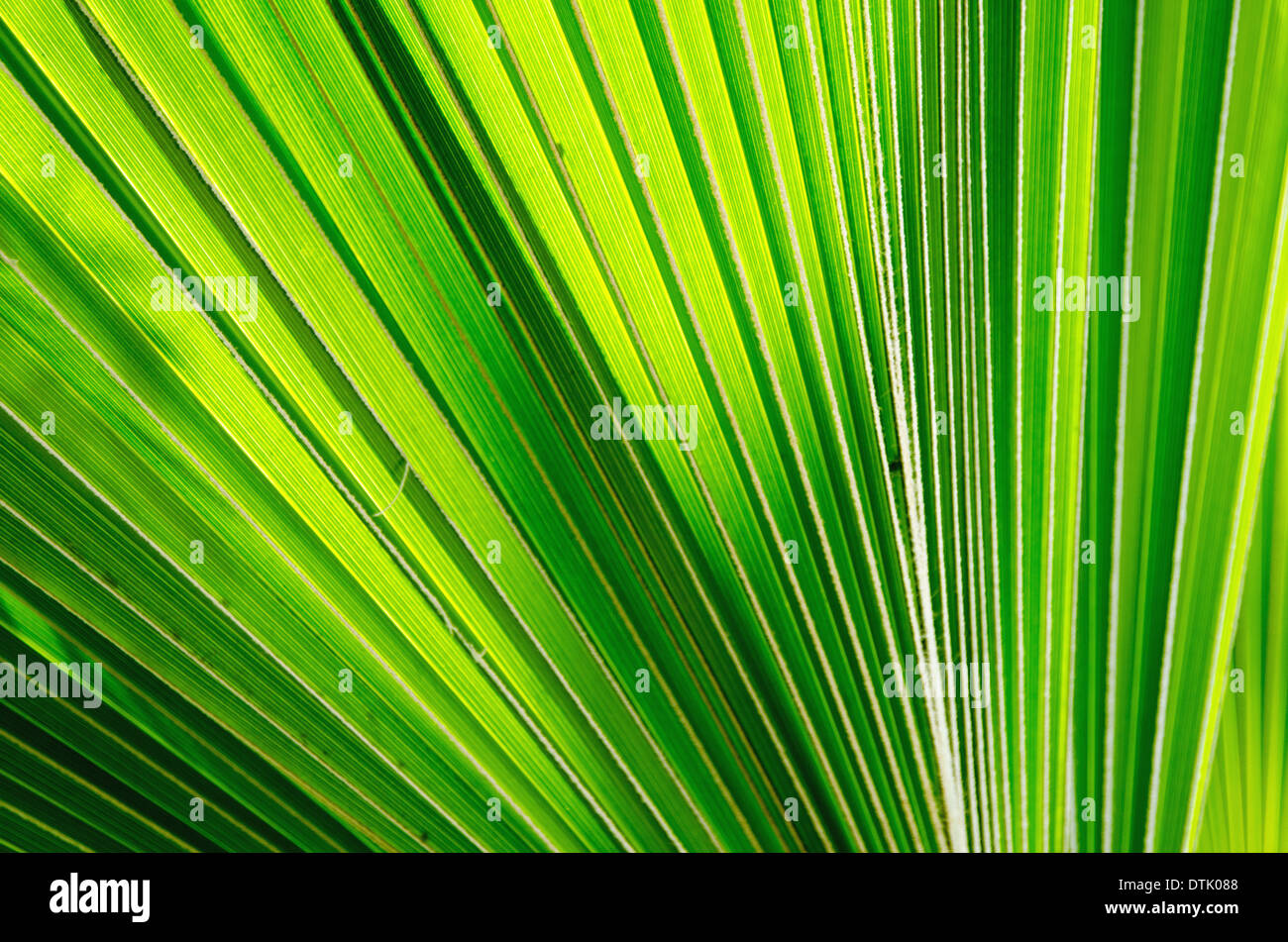 palm leaves in the botanical garden. - Stock Image