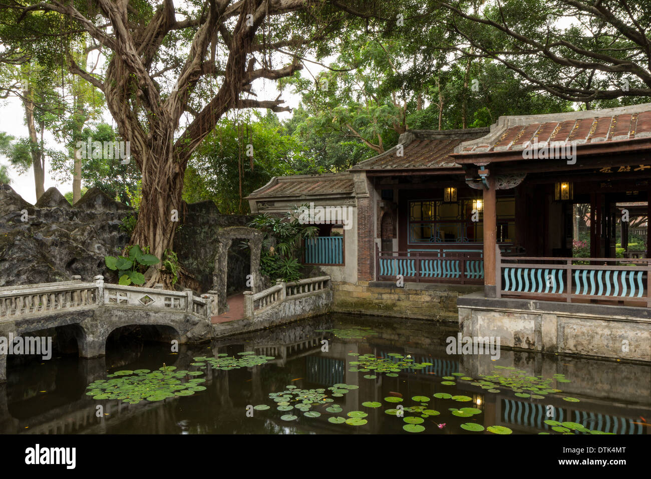 Chinese Banyan Stock Photos & Chinese Banyan Stock Images - Alamy