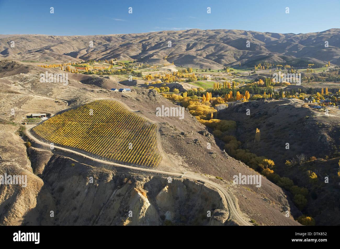 Vineyard and Carrick Range, Bannockburn, Central Otago, South Island, New Zealand - aerial - Stock Image