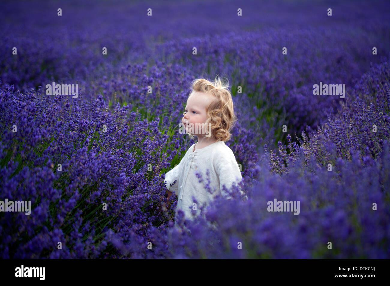 Boy walking in field of lavender - Stock Image