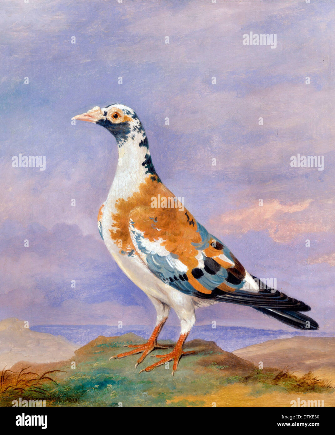 Dean Wolstenholme, Studies of Carrier Pigeon 1837 Oil on canvas. Yale Center for British Art, New Haven, USA. - Stock Image