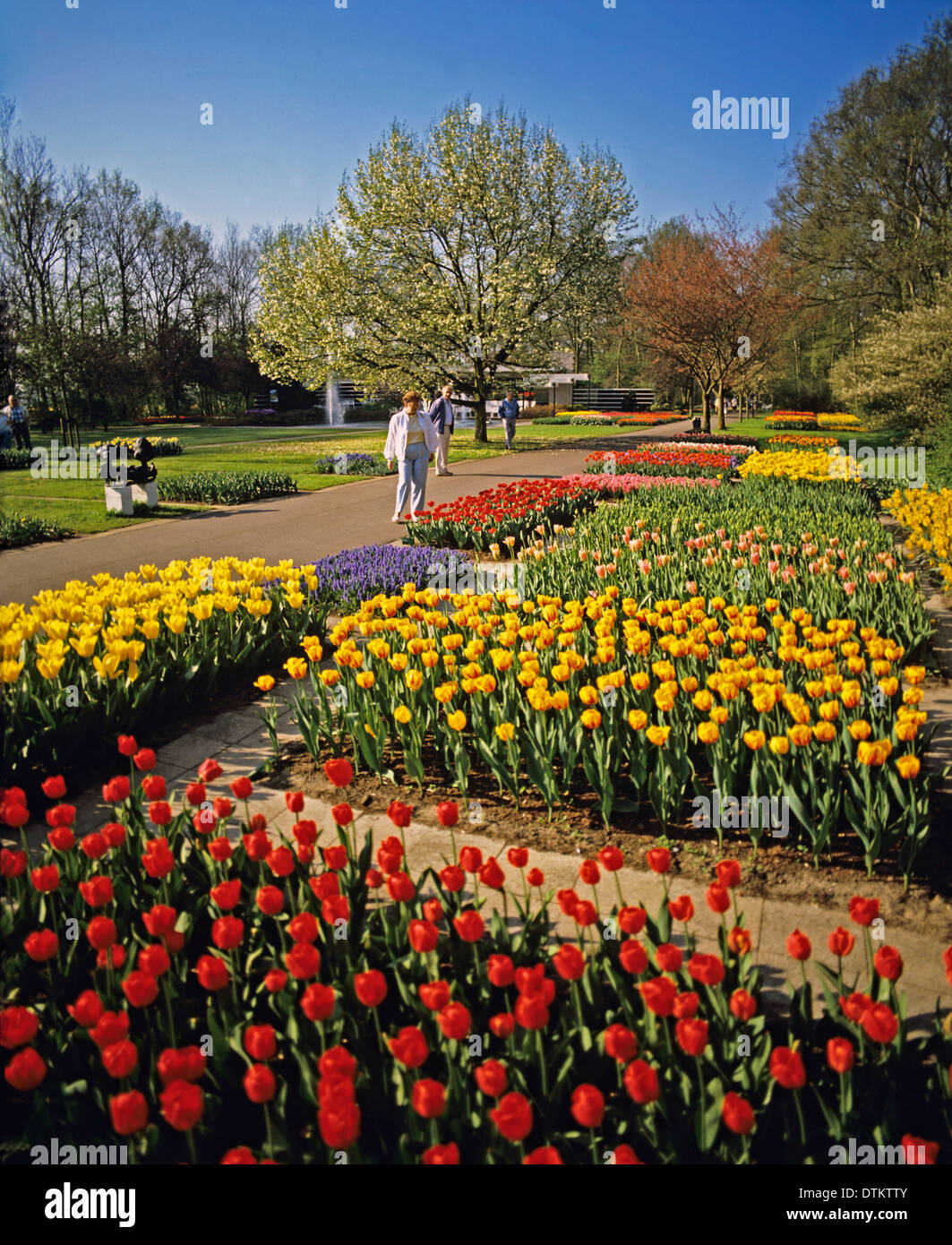 Tulip display at Keukenhof also known as the Garden of Europe, the ...