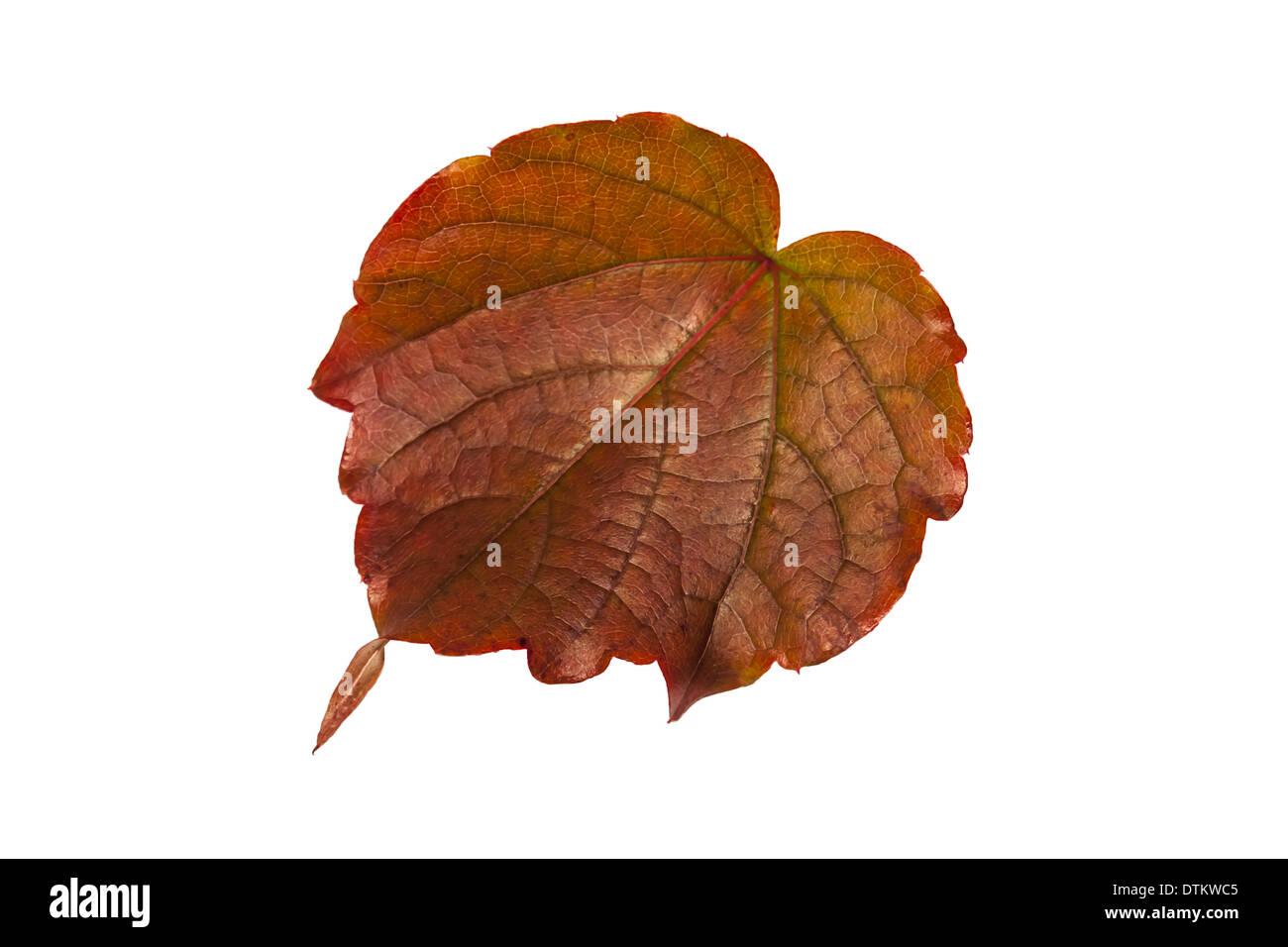 Im Herbst - Stock Image