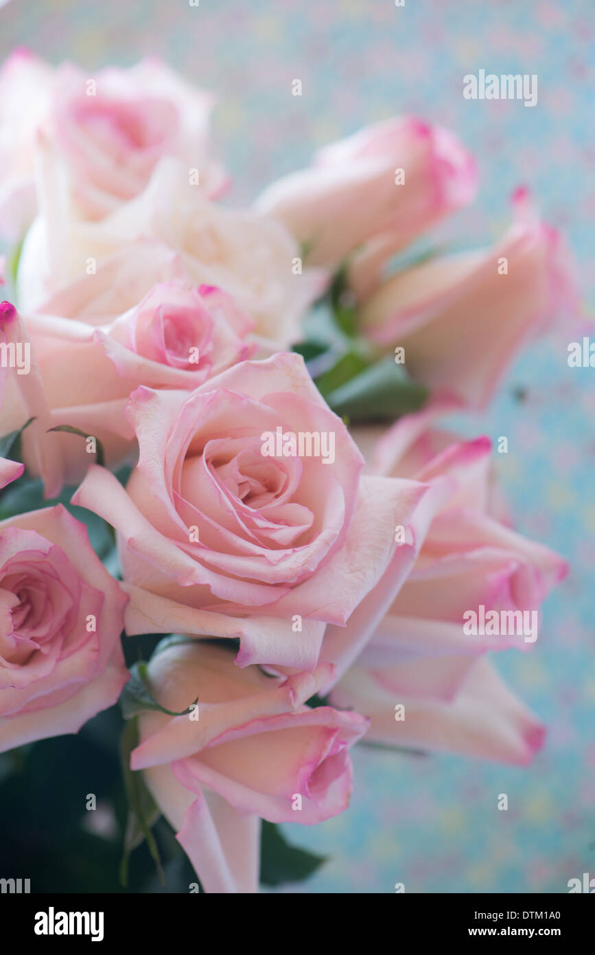 A Bouquet Of Pale Pink Roses On A Soft Aqua Background Stock Photo