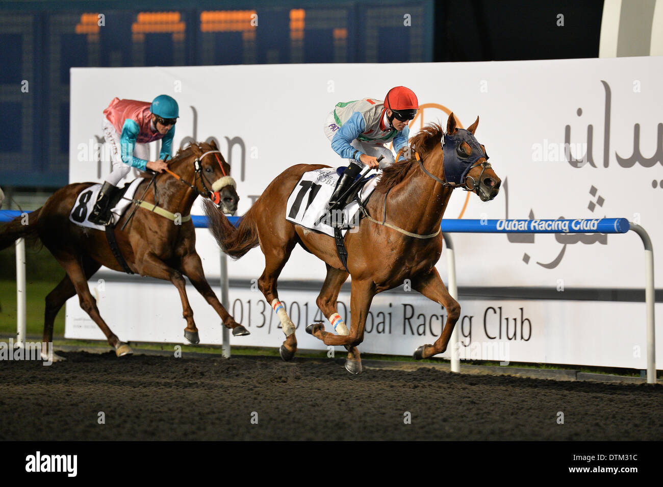 DUBAI, UAE, 20th Feb 2014. AVON PEARL ridden by Patrick Dobbs wins the Meydan Sobha at the Meydan race track. The horse is trained by R Haugen and owned by Jostein Jorgensen Credit:  Feroz Khan/Alamy Live News - Stock Image