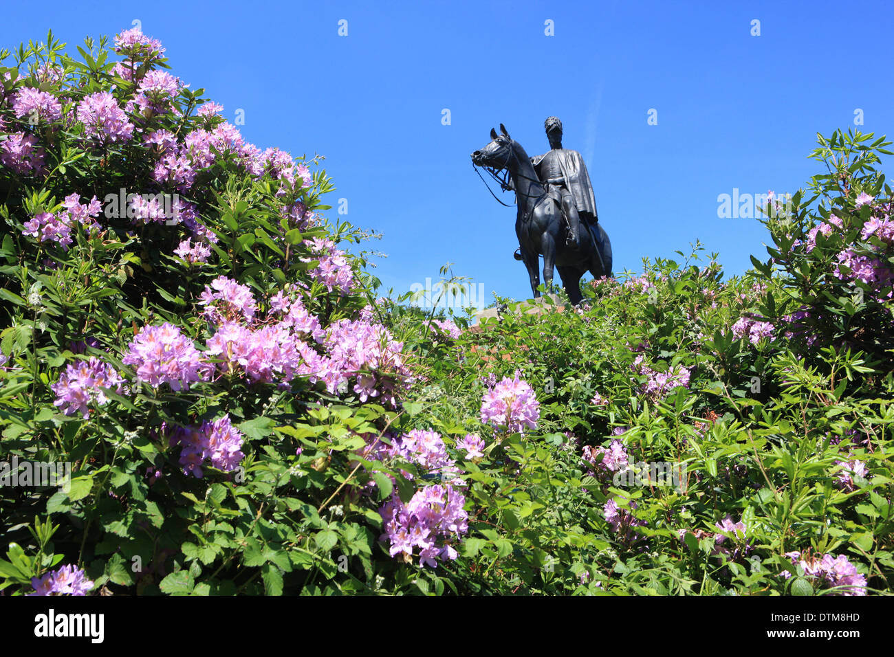 Statue of the Duke of Wellington Arthur Wellesley on his horse Copenhagen on Round Hill Aldershot, with its Rhododendron - Stock Image