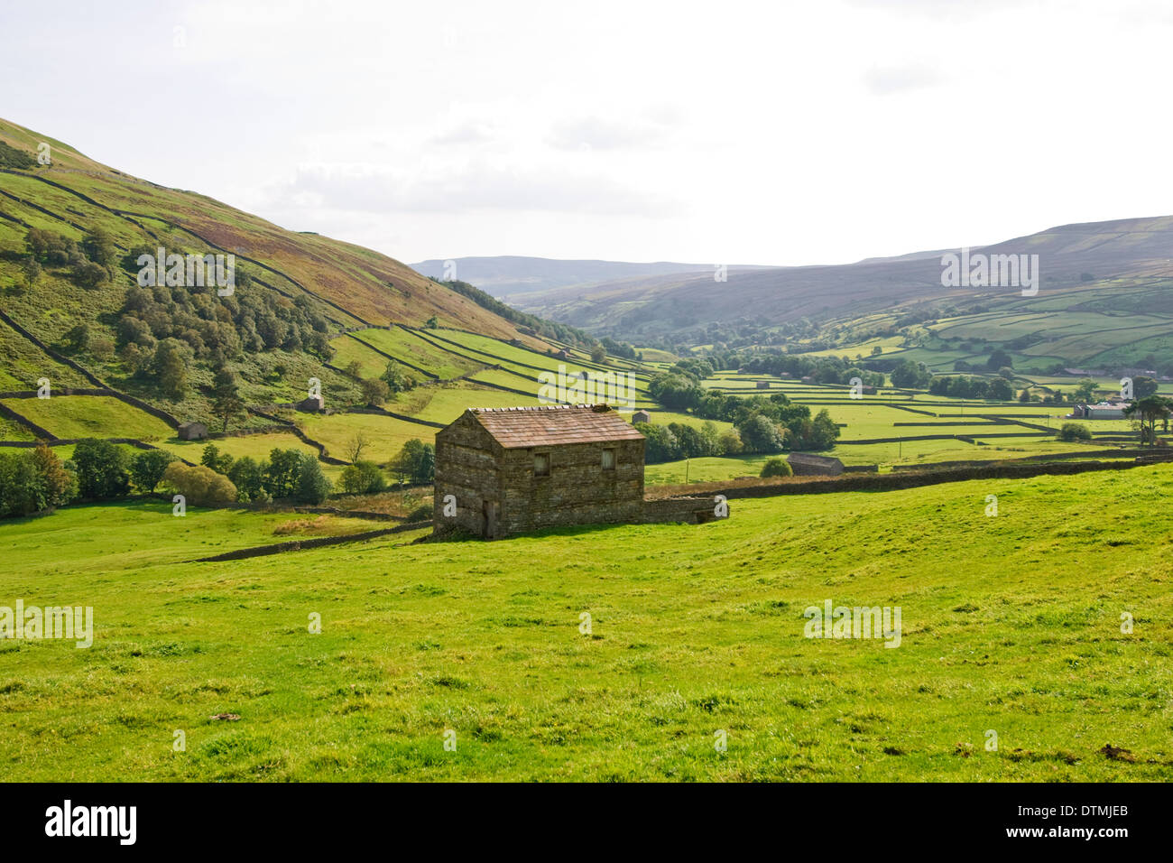 Stone Dykes and pasture in the Yorkshire Dales Stock Photo