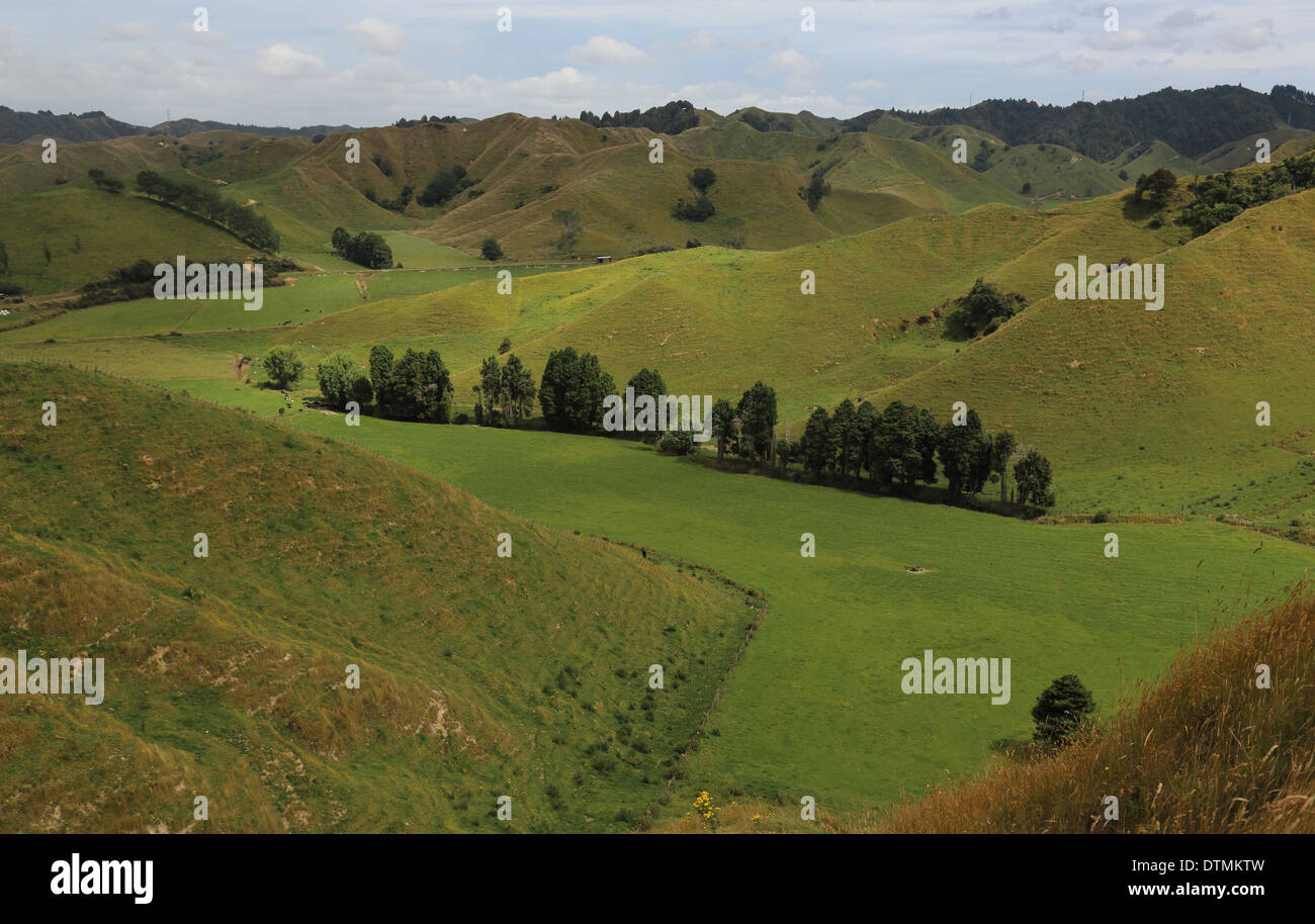 View of Strathmore Saddle from the Forgotten World Highway (SH 43), Whanganui National Park, North Island, New Zealand - Stock Image