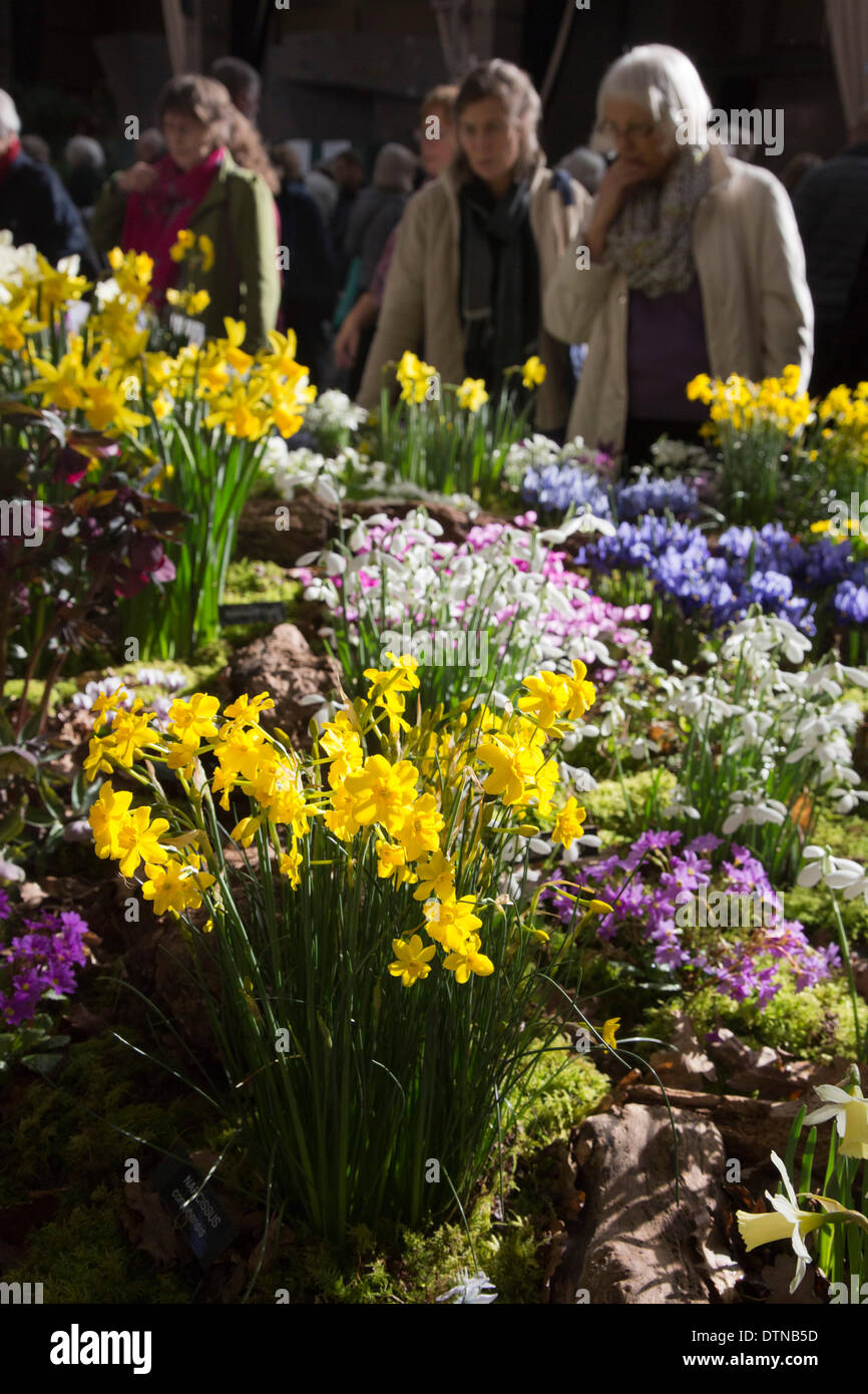21 February 2014, London, UK. The RHS London Show showcasing early flowering plants takes place at the Royal Horticultural Halls, London. Photo: Nick Savage/Alamy Live News - Stock Image