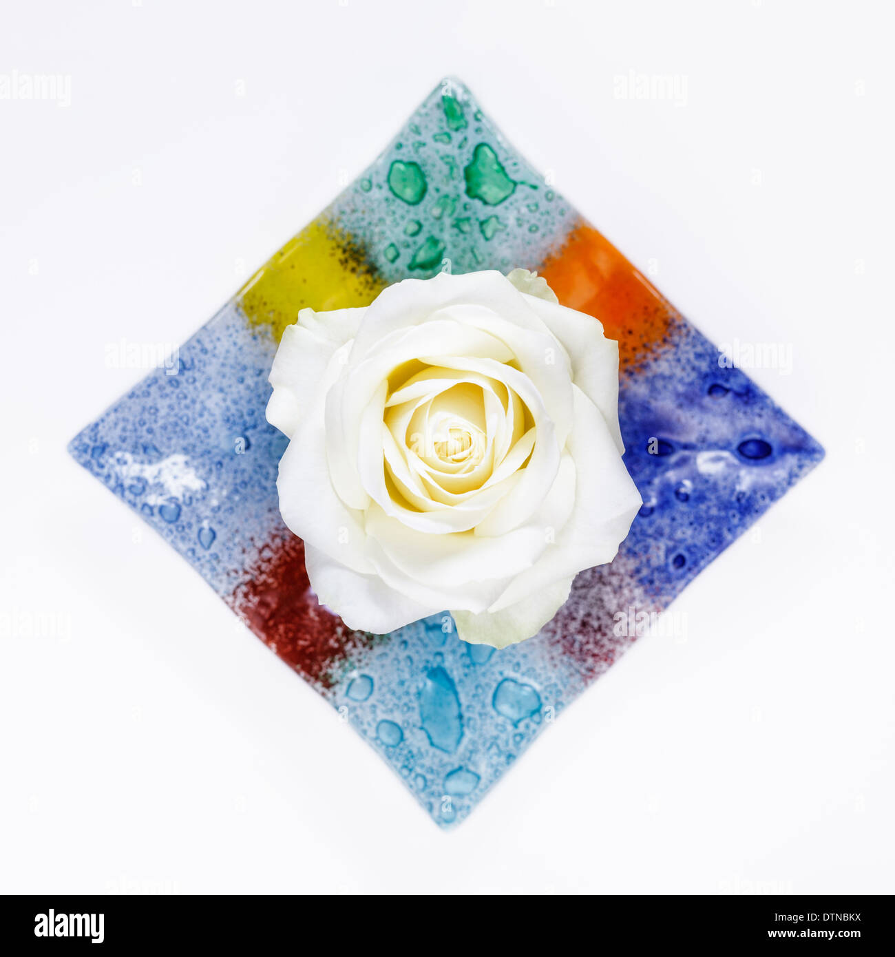 White rose in colored glass bowl - Stock Image