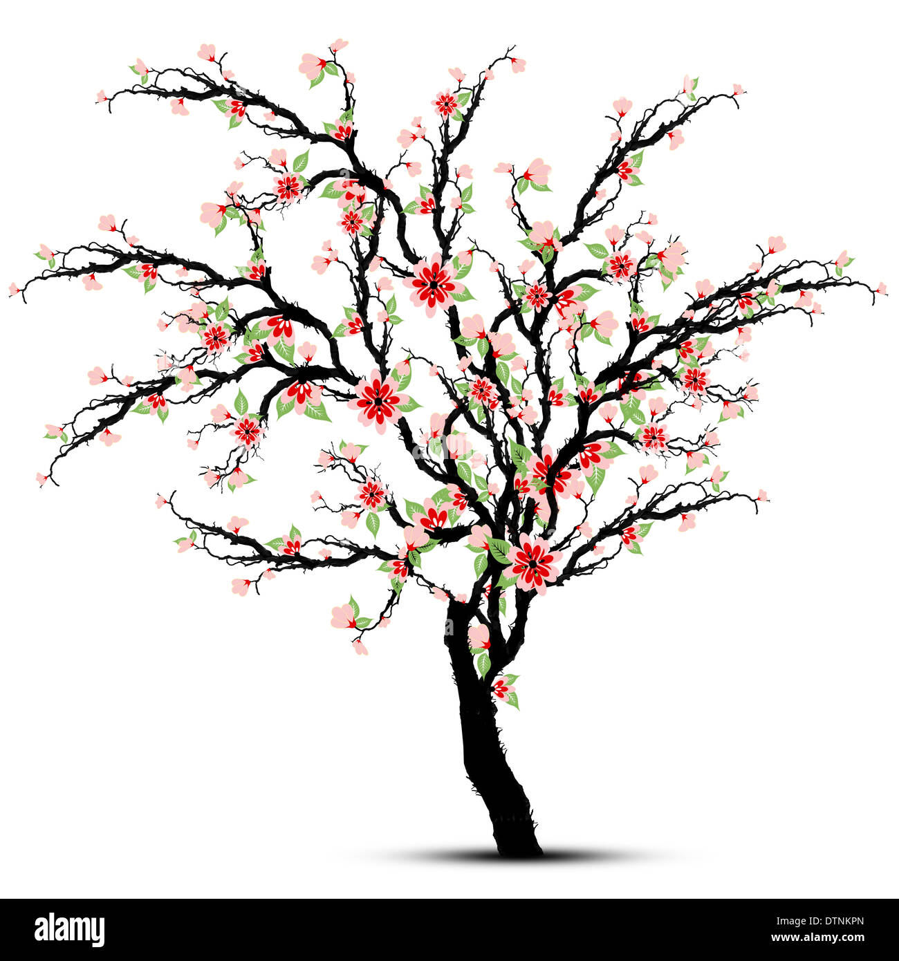 red cherry blossom tree cut out stock images pictures alamy