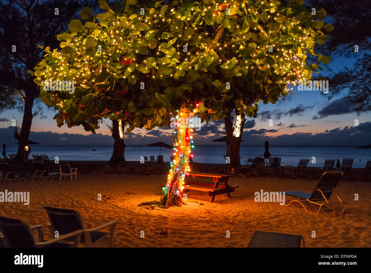 A tree with Christmas lights at dusk on Seven Seas Beach in Grand Cayman - Stock Image