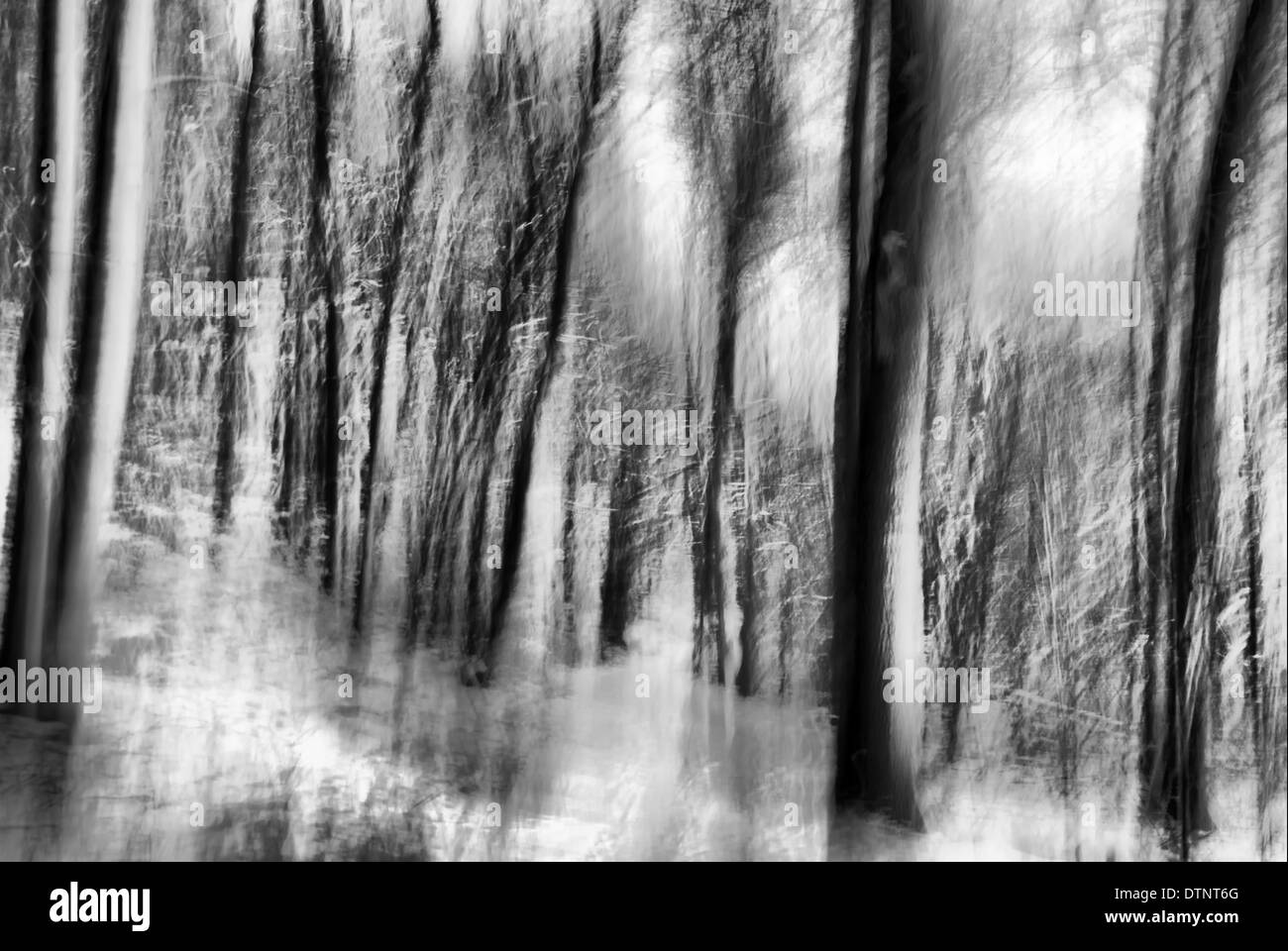 Winter Forest - Stock Image