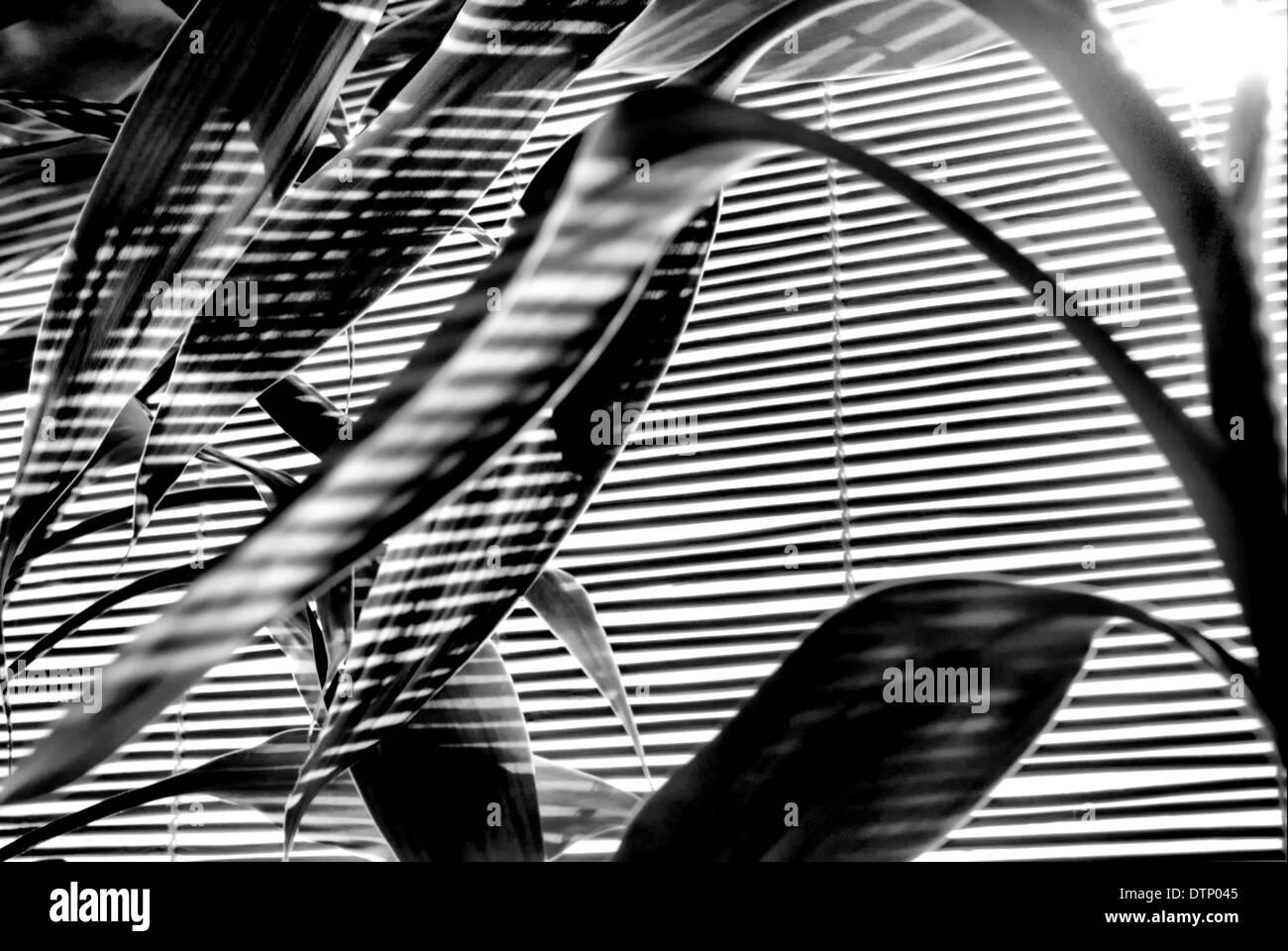 Shadow and Light - Stock Image