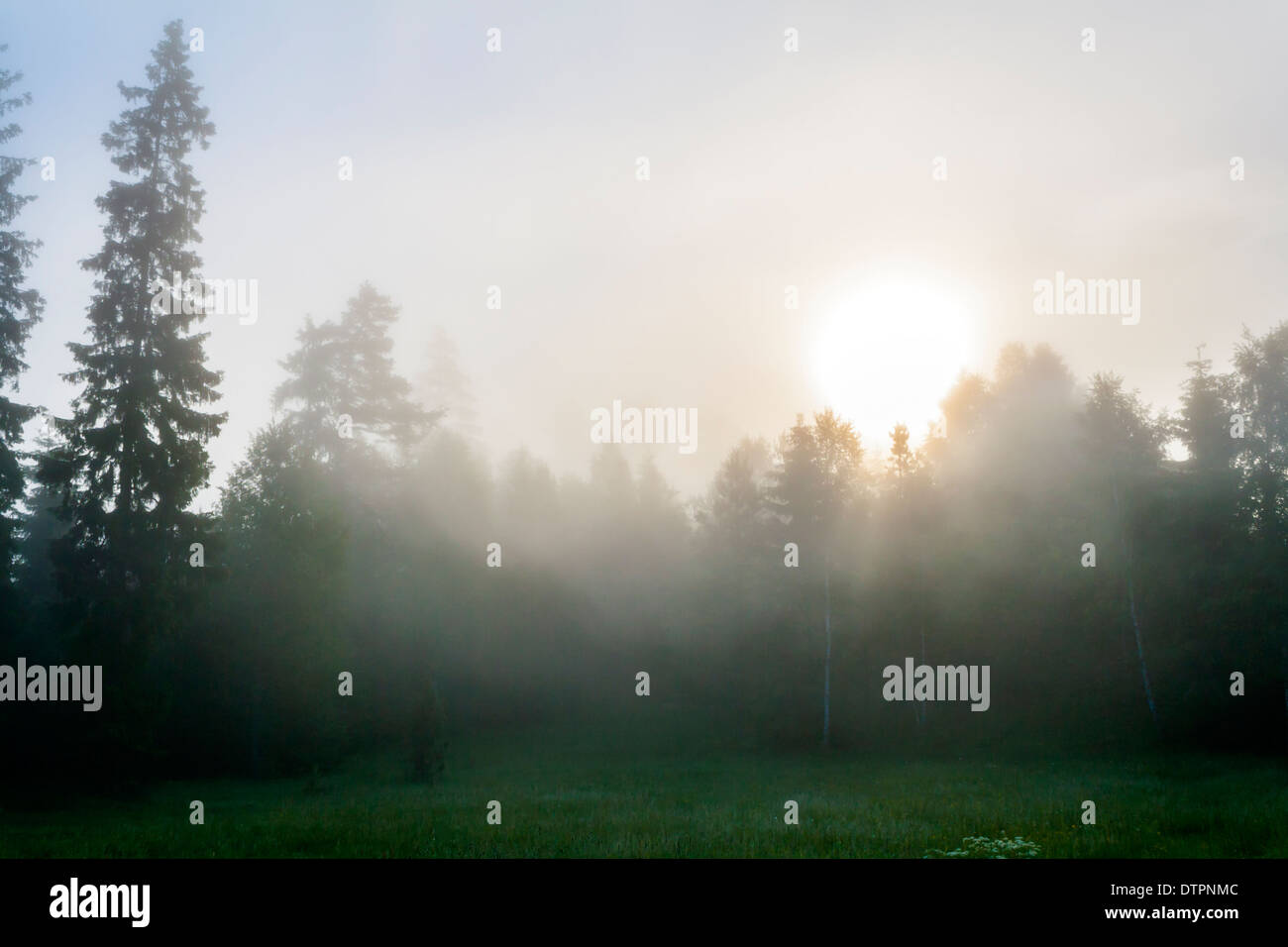 Forest and Meadow with Morning Sun Shining through Fog - Stock Image