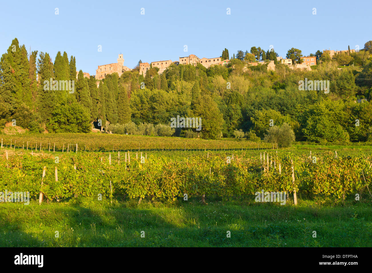 Vineyards below the Tuscan hill town of Montepulciano, Tuscany, Italy - Stock Image