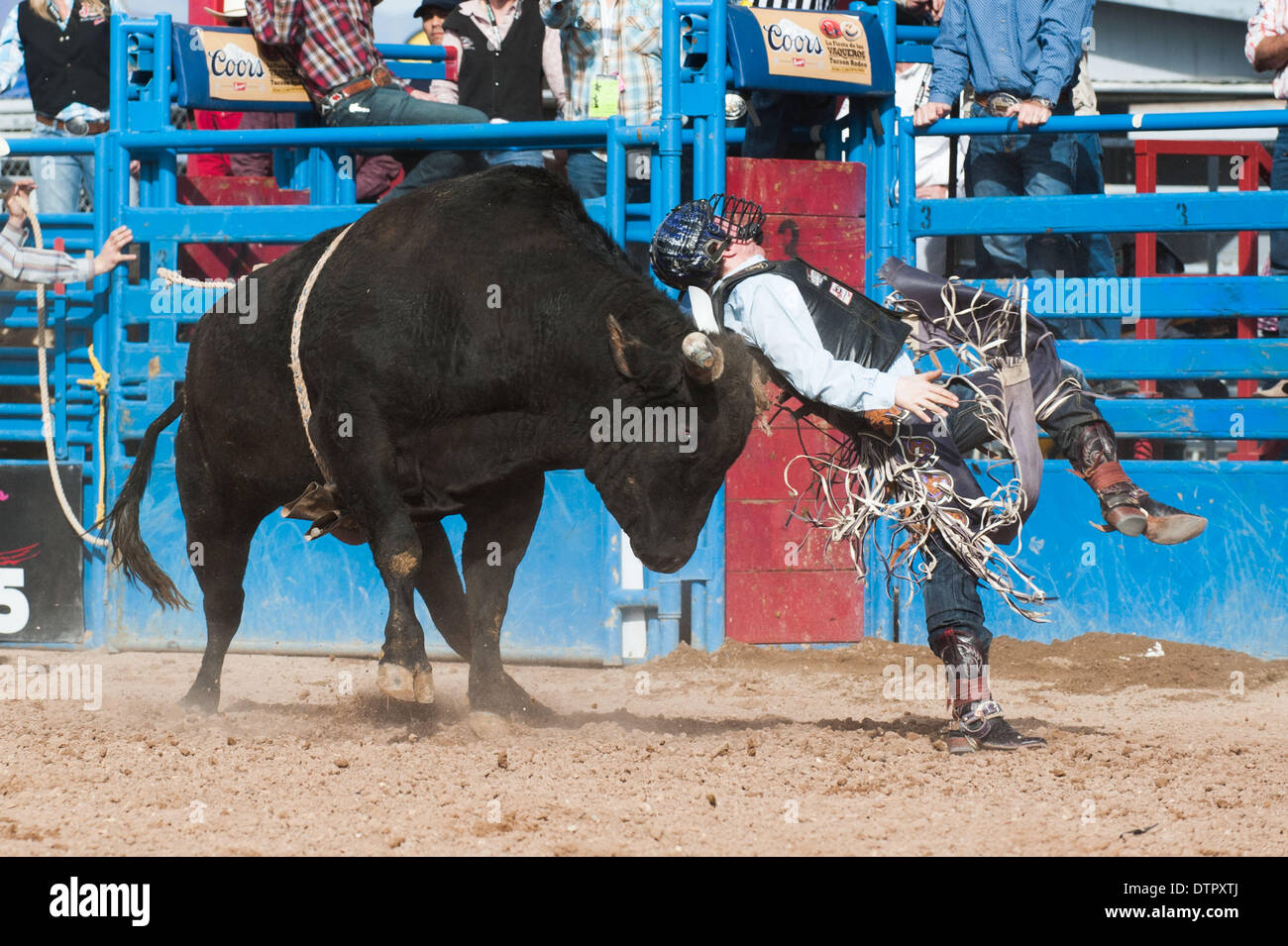 Tucson, Arizona, USA. 22nd Feb, 2014. WACE HOLMES gets gored in the back by a bull named ''Price Buster'' during Stock Photo
