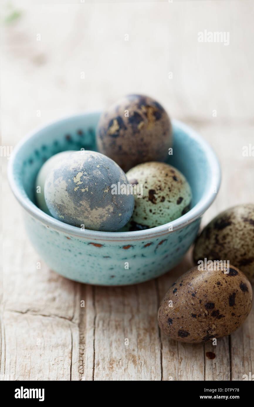 quails eggs - Stock Image
