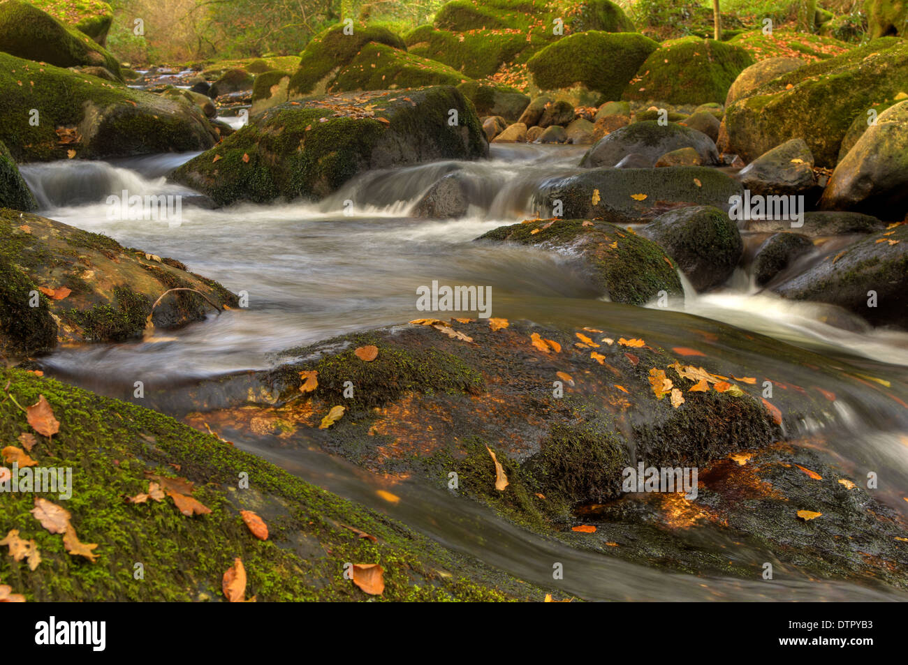 Whitewater rapids in the autumn on the River Aune - Dartmoor National Park Stock Photo