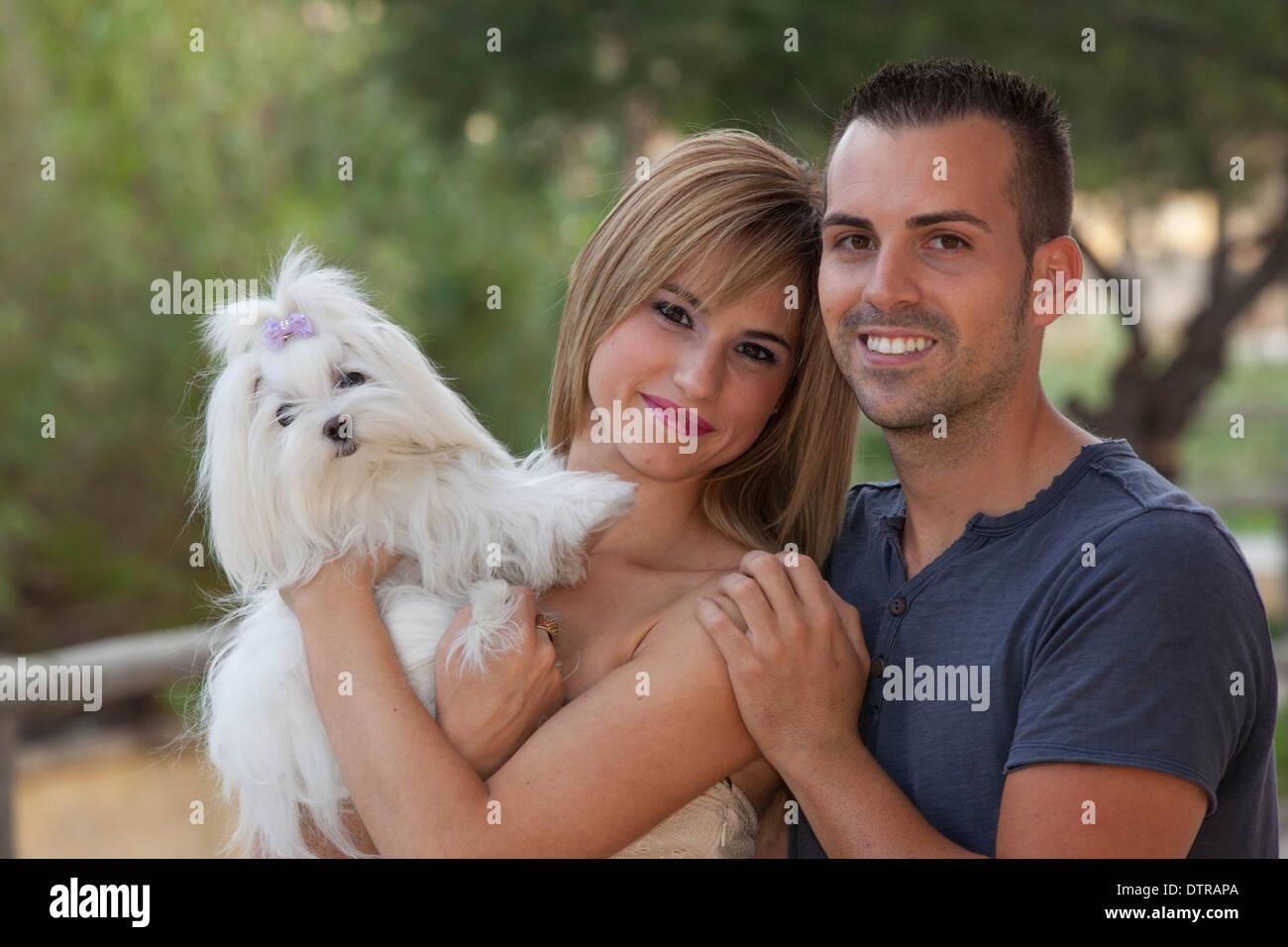 family pet Maltese dog - Stock Image