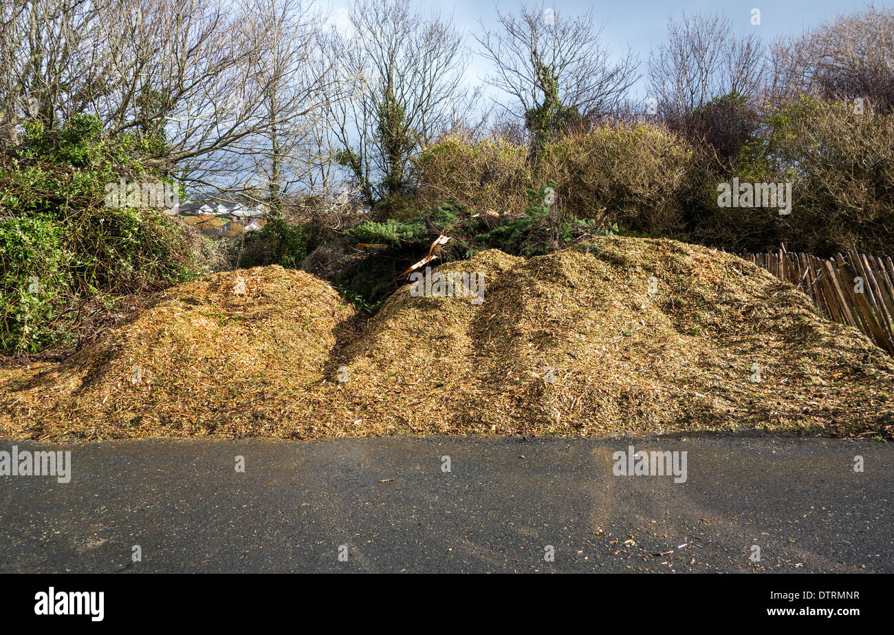 wood chippings for garden mulch Stock Photo