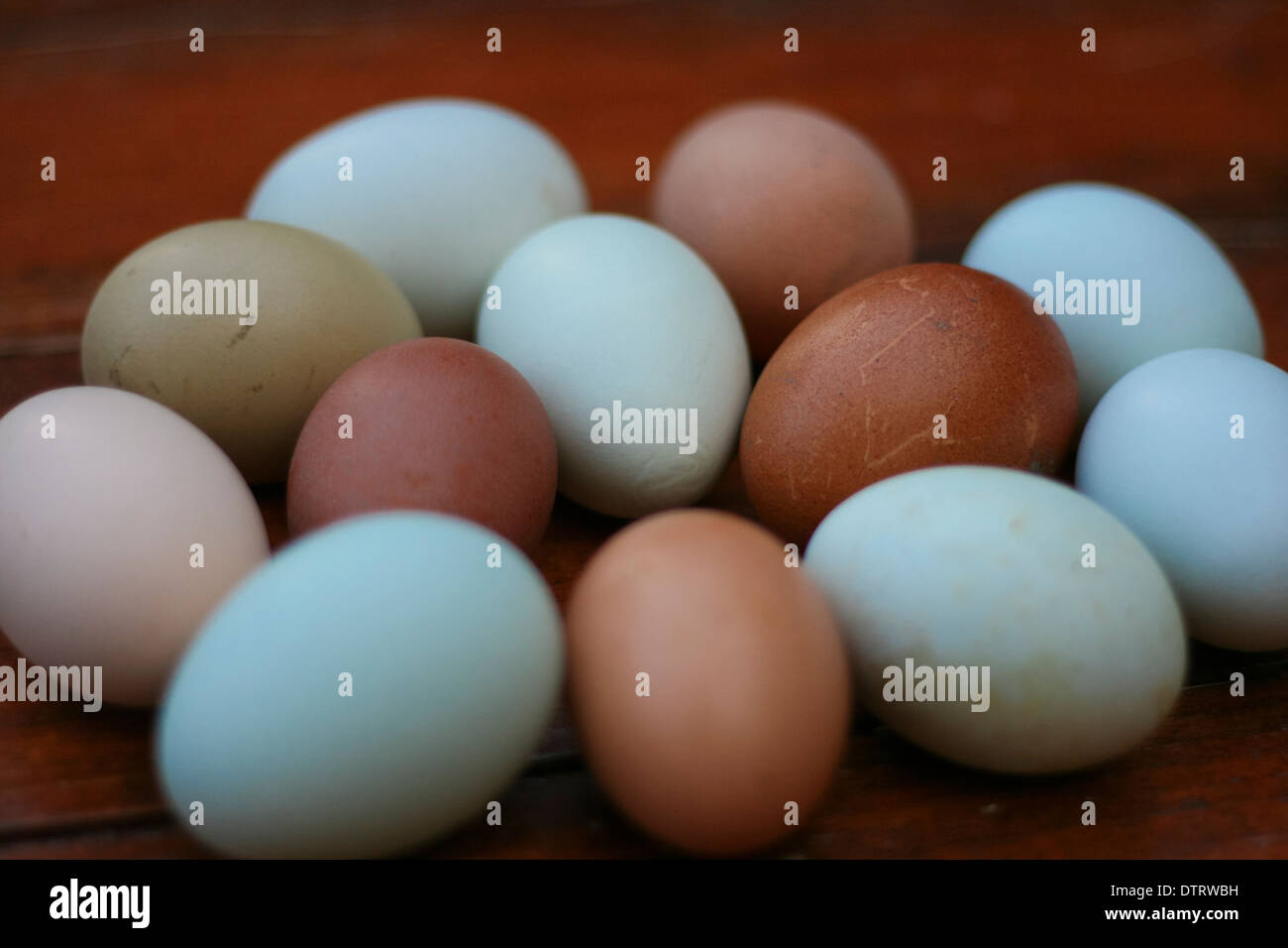 Natural Colored Eggs High Resolution Stock Photography And Images Alamy
