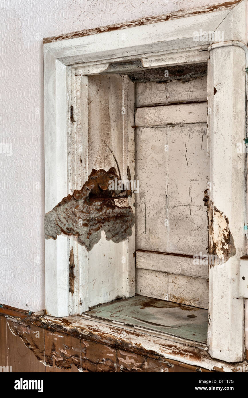 A fruiting body of dry rot fungus in an empty house, UK - Stock Image