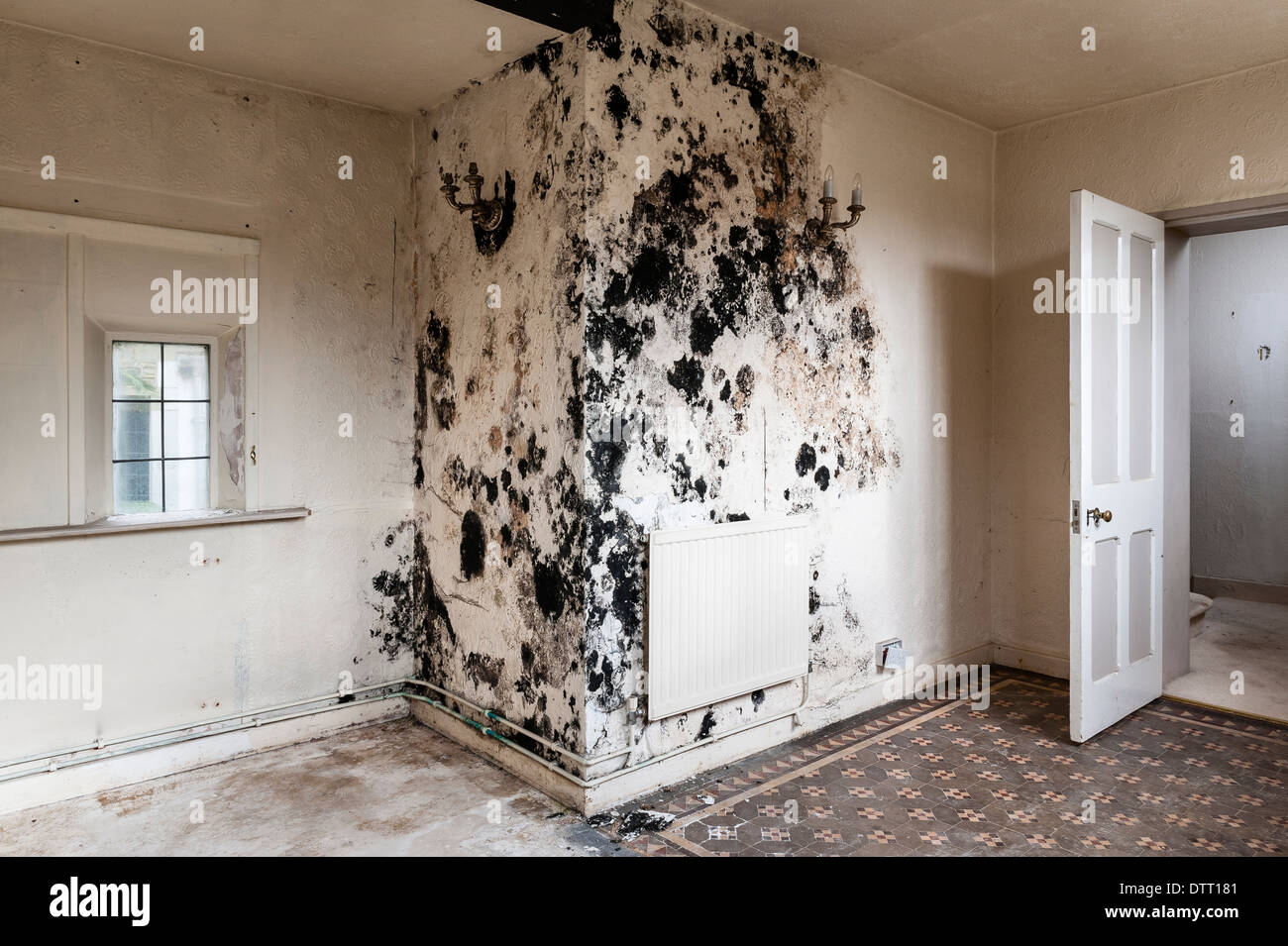 Black Mould Stachybotrys Chartarum In An Empty House Uk A Health Stock Photo 66910705 Alamy