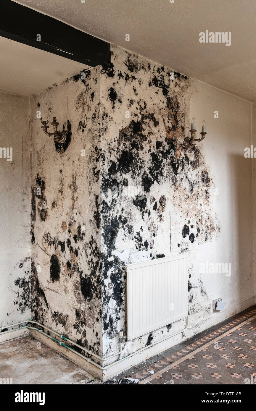 Black Mould Stachybotrys Chartarum In An Empty House Uk