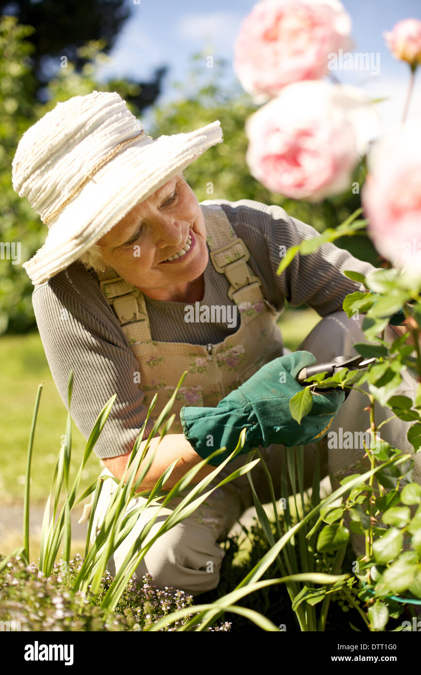 Happy senior woman cutting flowers from plants in her garden smiling - Elderly woman gardening in backyard - Stock Image