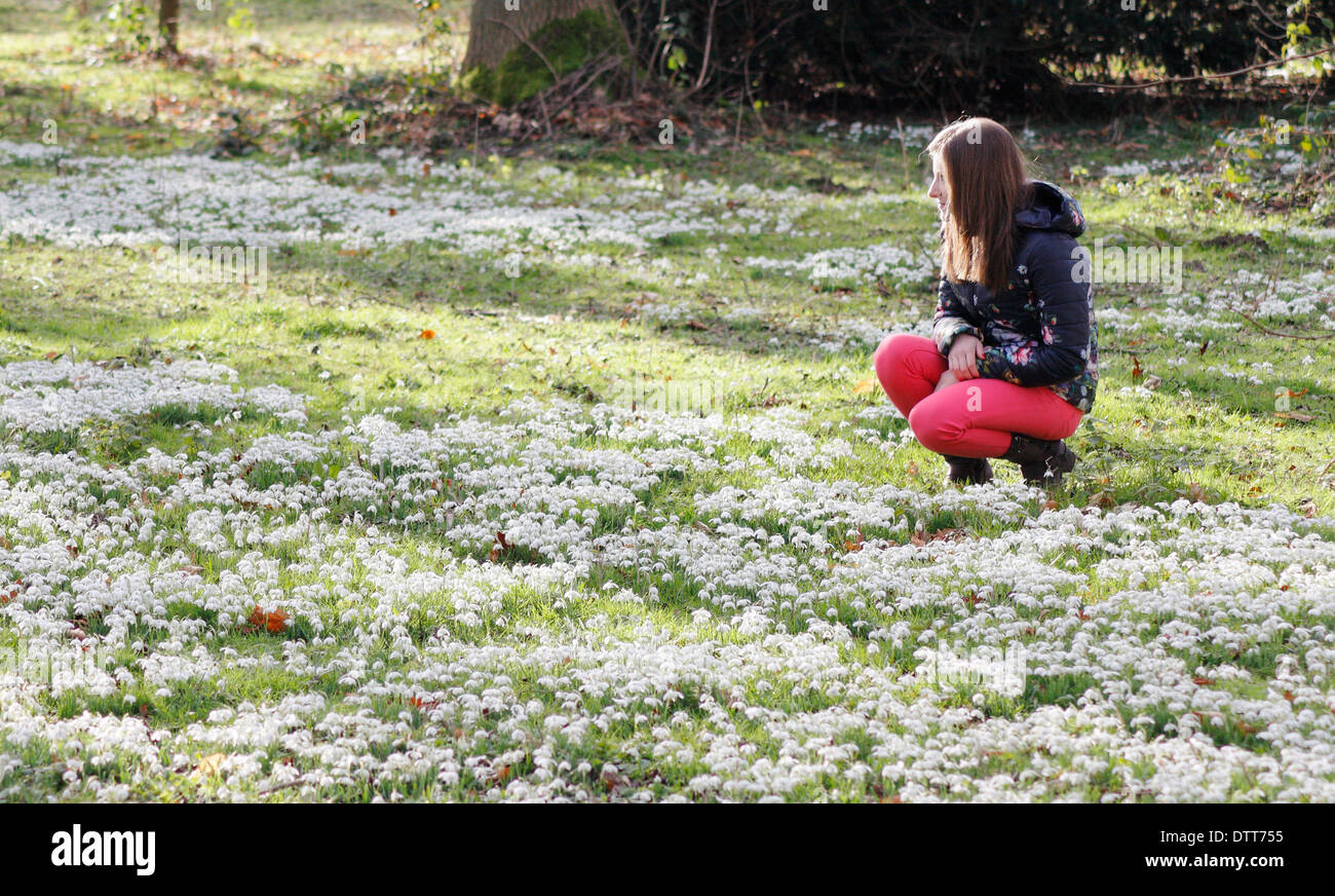 Young woman, early 20's, admiring snowdrops (Galanthus Nivalis) in deciduous woodland atHodsock Priory, Nottinghamshire, England - Stock Image