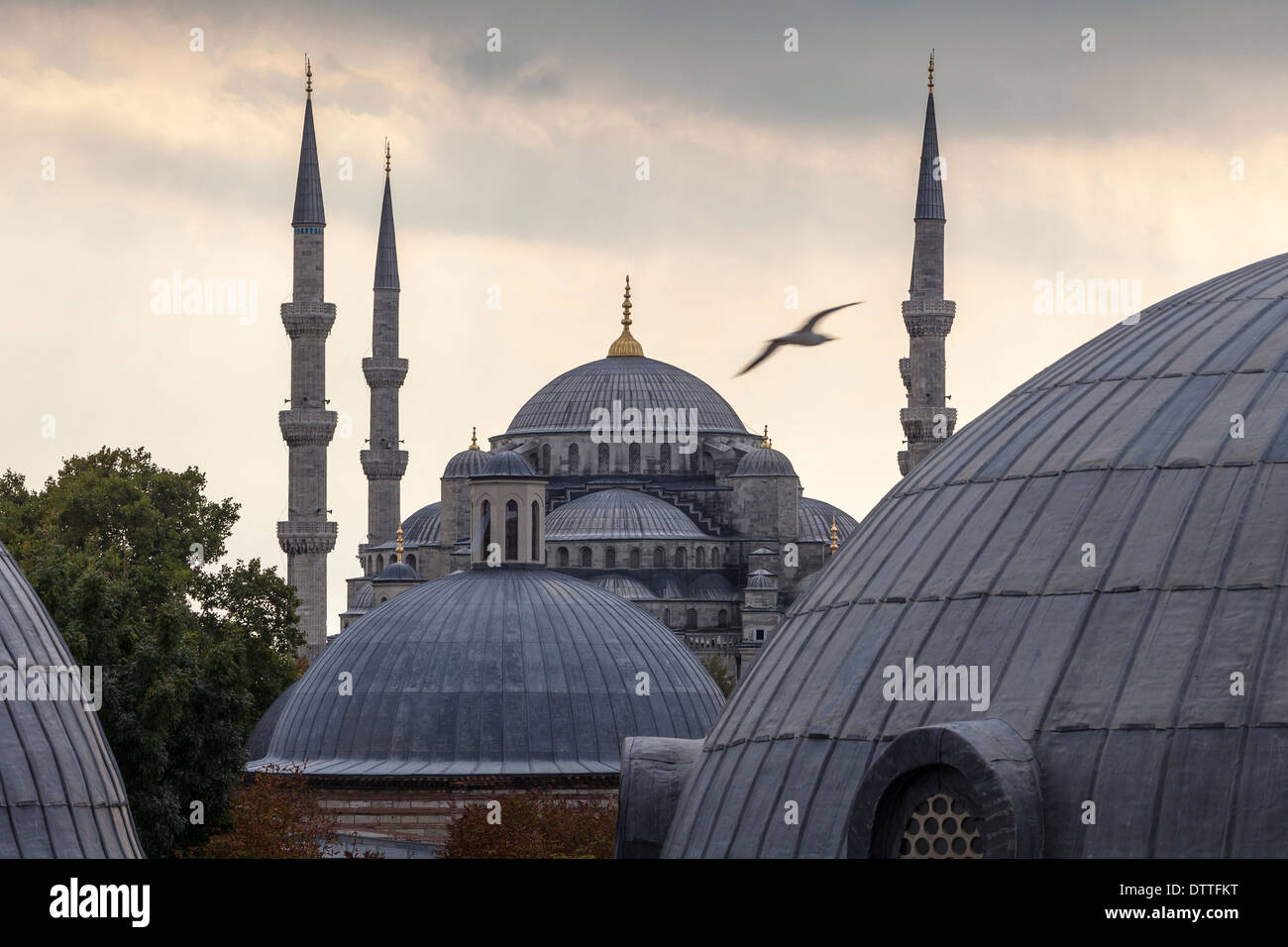 Domes and towers of Blue Mosque, Istanbul, Turkey - Stock Image