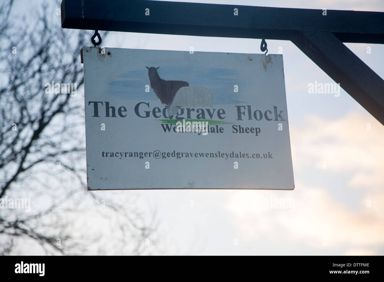 Sign for the Gedgrave Flock of Wensleydale sheep, Suffolk, England Stock Photo
