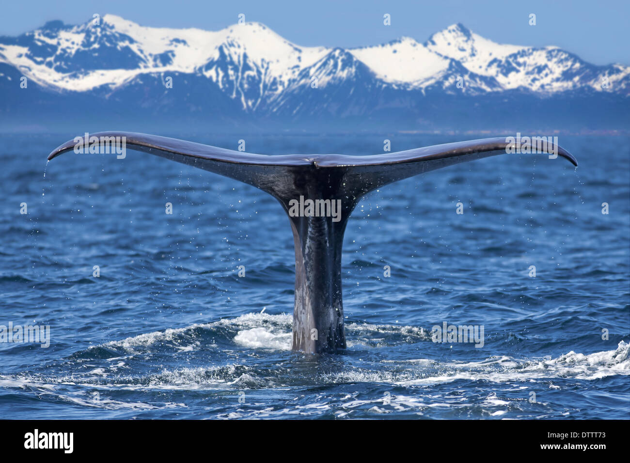 Whale tail - Stock Image