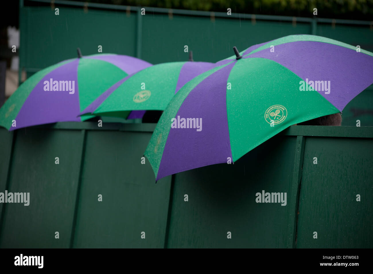 Thee Wimbledon umbrellas open in rain - Stock Image