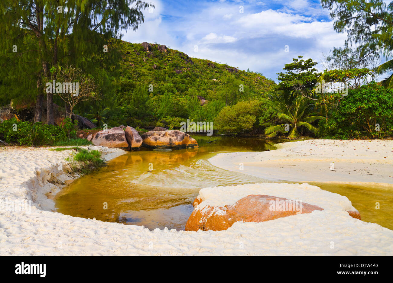 River in jungles at Seychelles - Stock Image