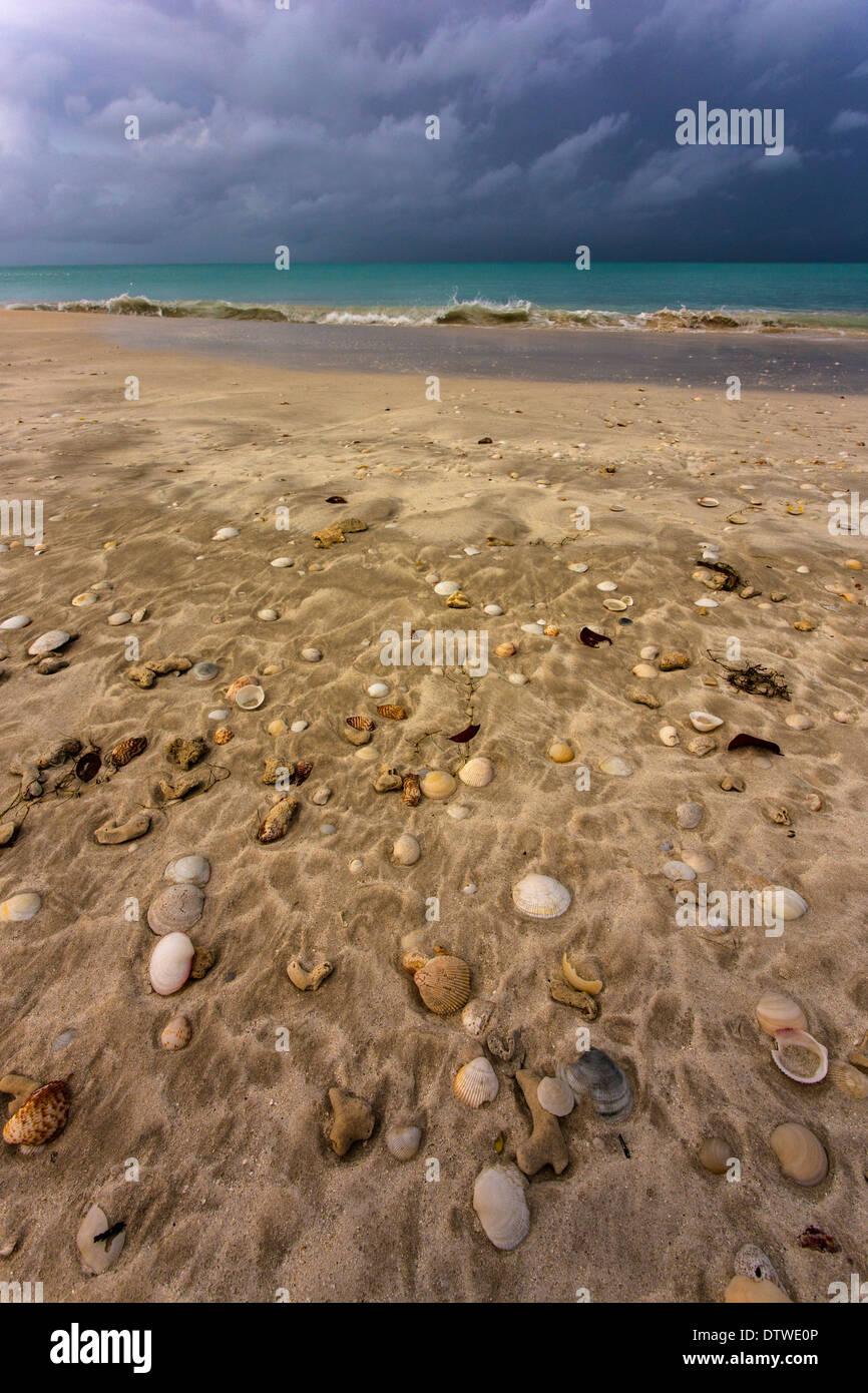 Shells and beach,Jolly Beach,Antigua,West Indies - Stock Image