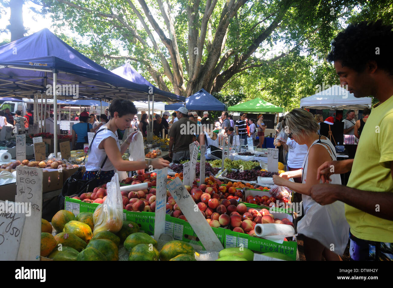 Fruit stall at outdoor weeked market in the shade of enormous trees, West End, Brisbane, Queensland, Australia. No MR or PR - Stock Image