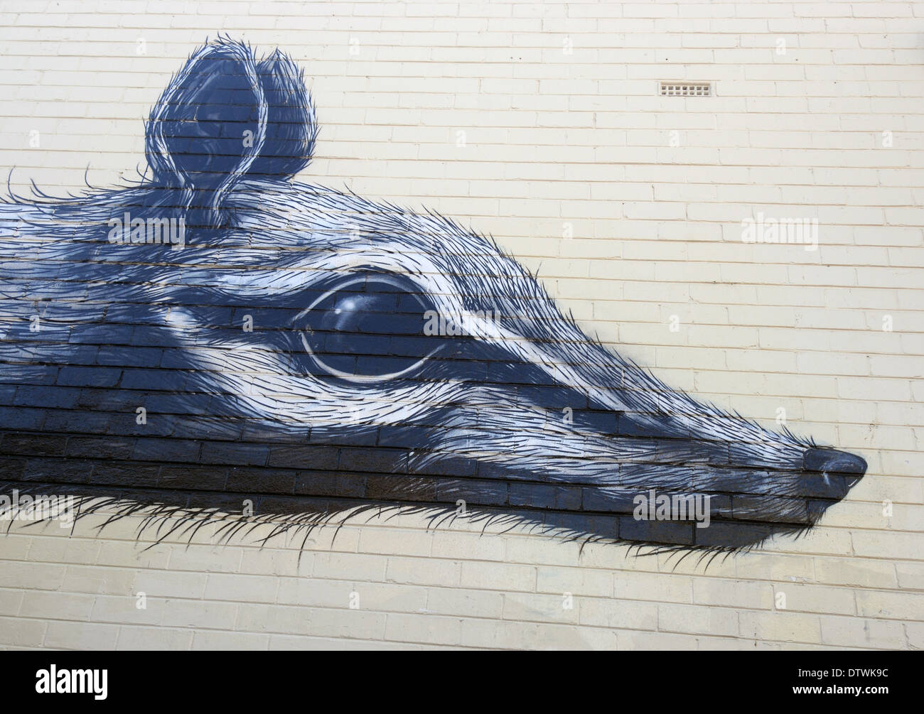 Numbat painted on wall, Fremantle, Perth, Western Australia. No PR - Stock Image