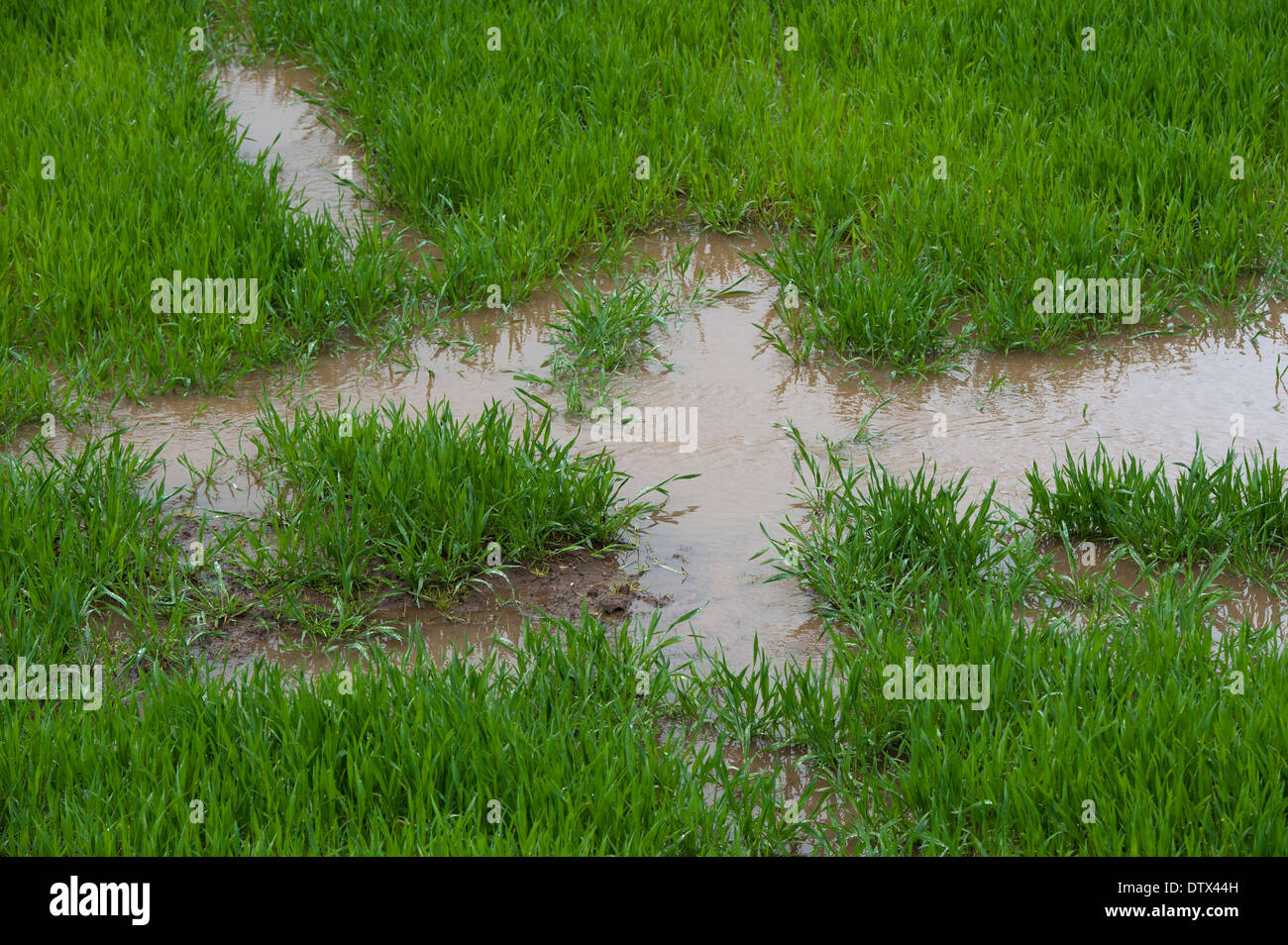 Waterlogged grassland after spring flooding. Cumbria. Stock Photo