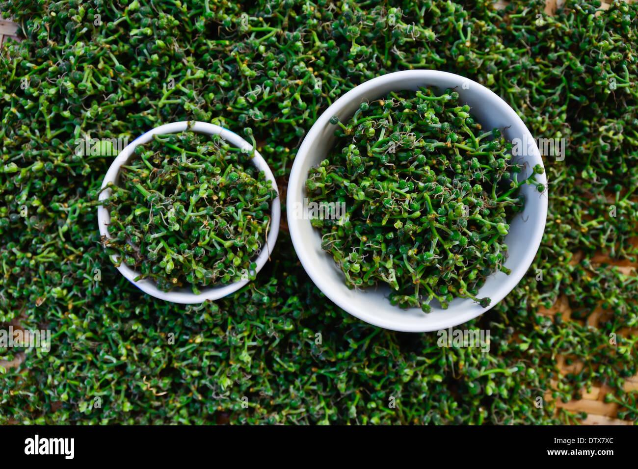 Salae (Broussonetia kurreii Corner) in whtie bowl on  bamboo basket ; Thai people believe Salae is longevity food - Stock Image