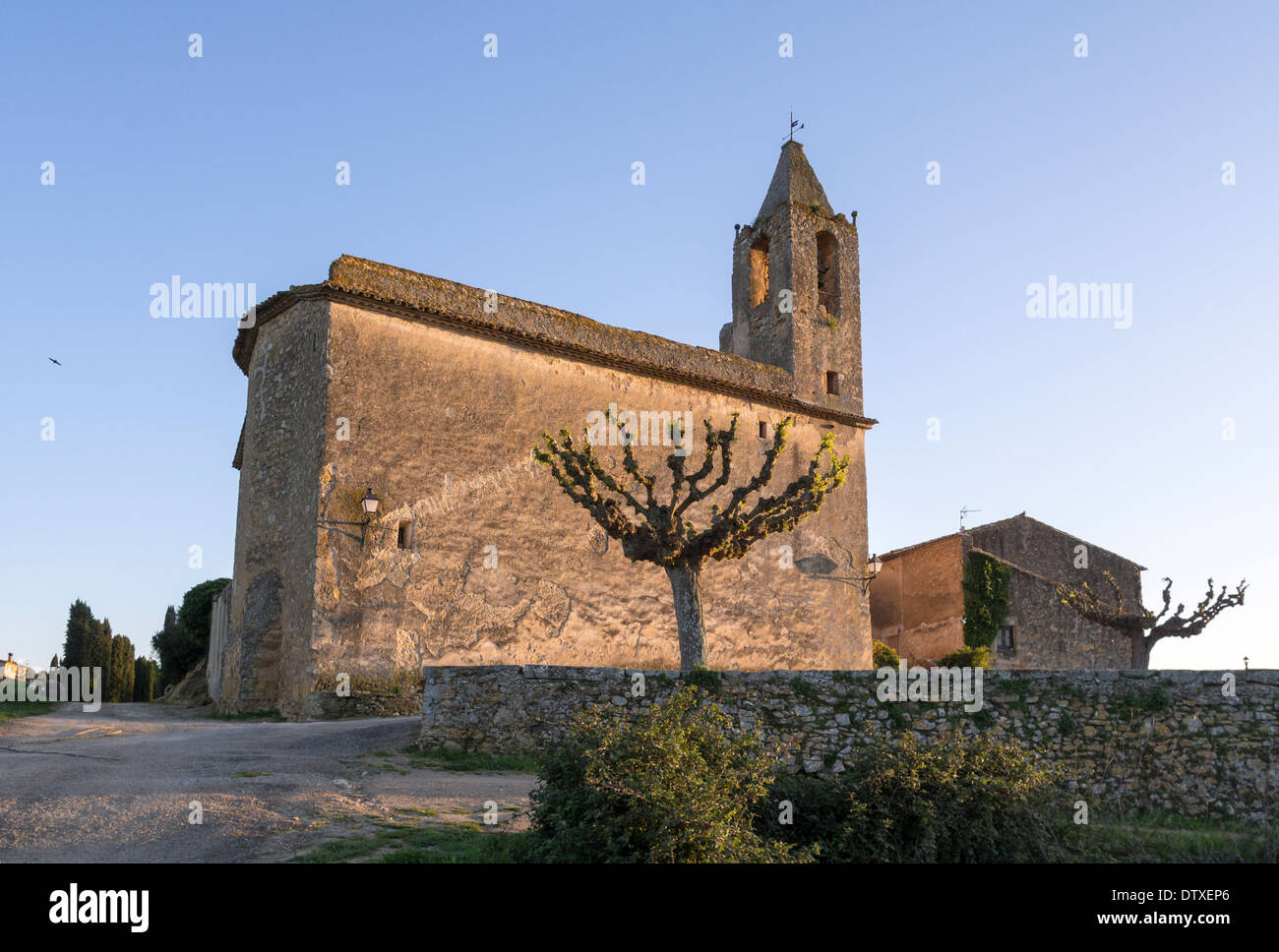 Ancient Church, New Growth. A heavily pruned tree sprouts new spring leaves at the side of an ancient rural church in Catalonia. - Stock Image