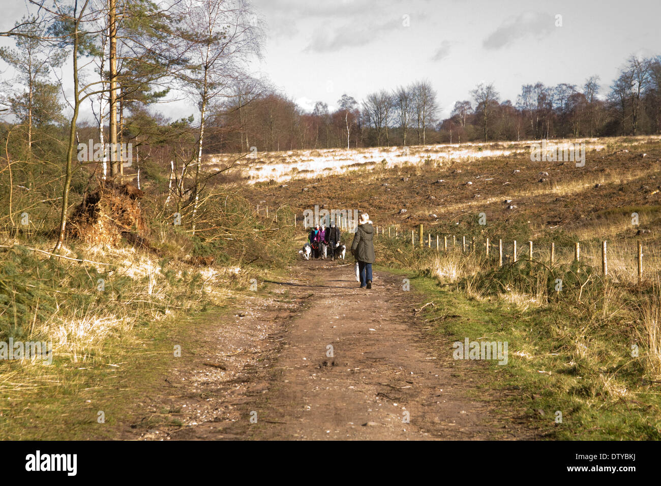 Cannock Chase Staffordshire England UK Dog Walkers on one of many tracks in this AONB - Stock Image