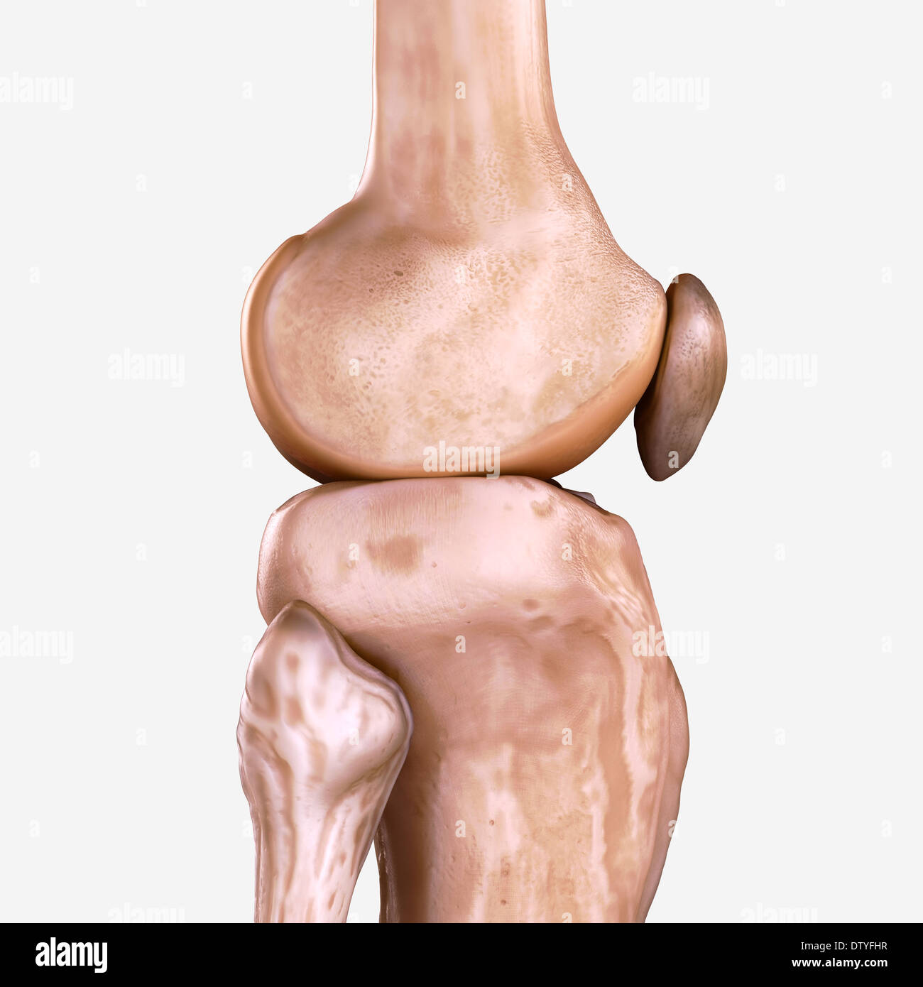 Right Knee Bones Stock Photo: 66987811 - Alamy
